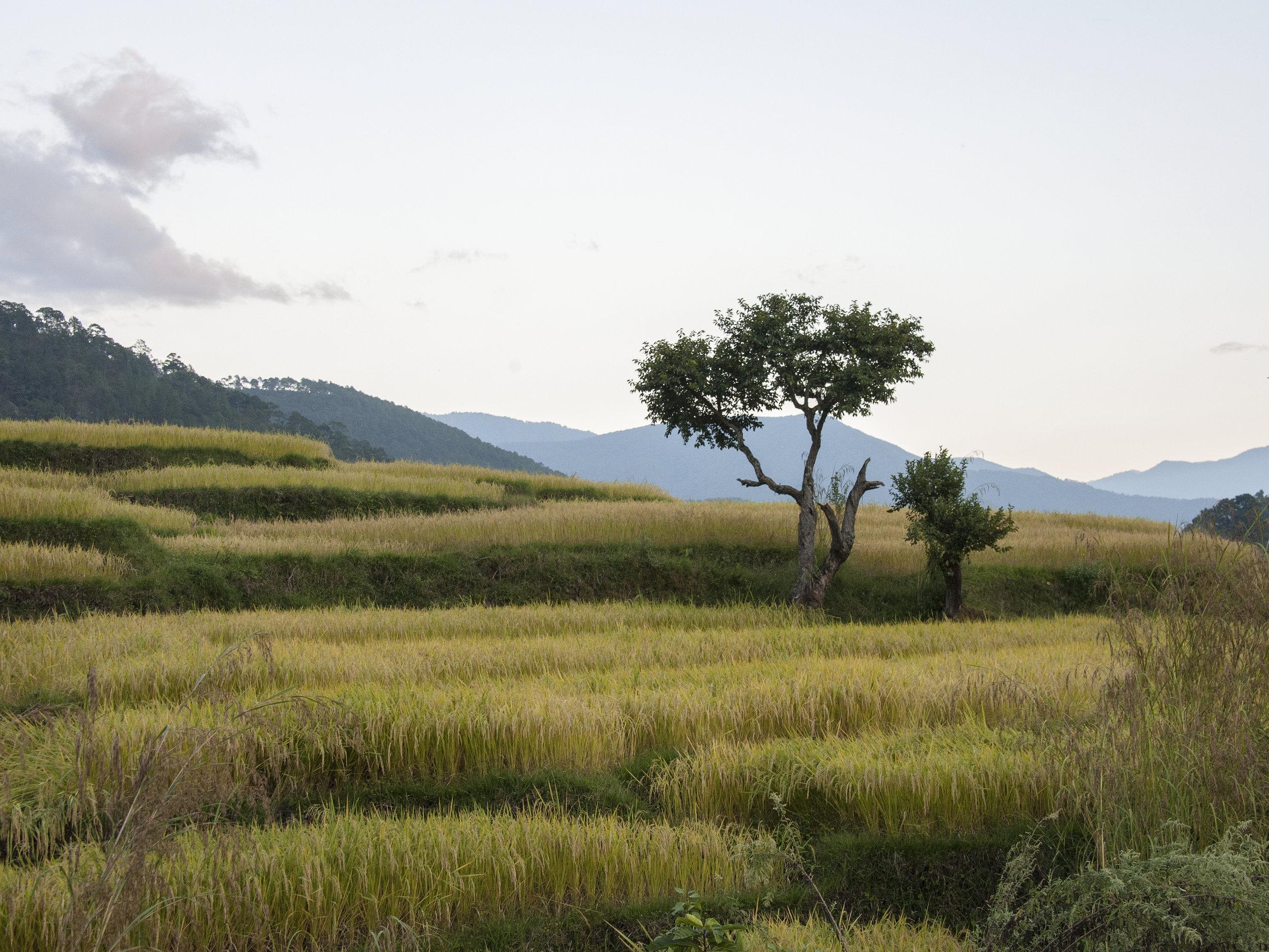 bhutan47.jpg