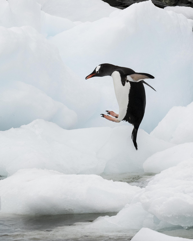 penguin10.jpg