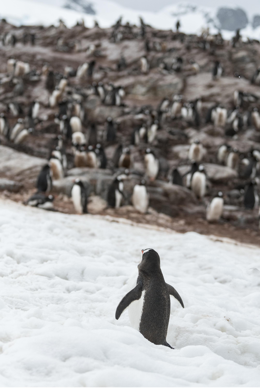 penguin12.jpg