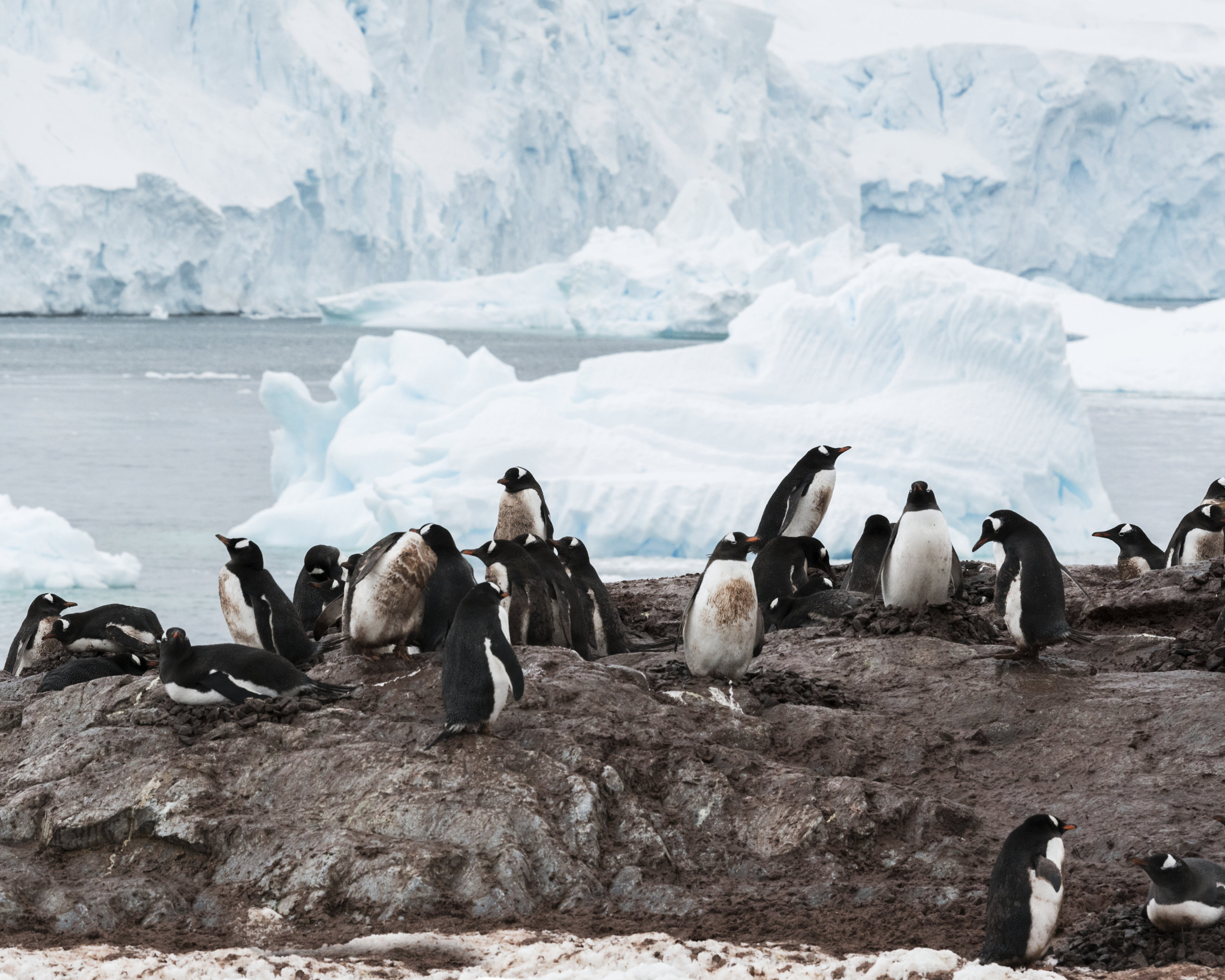 penguin13.jpg