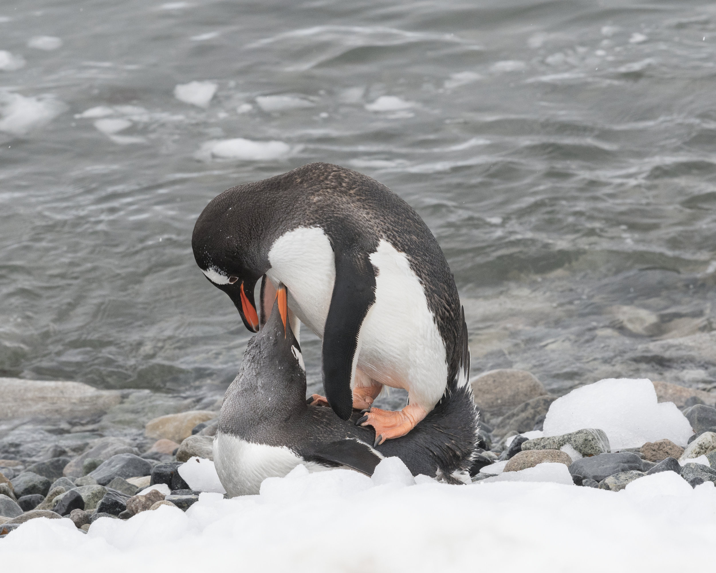 penguin18.jpg