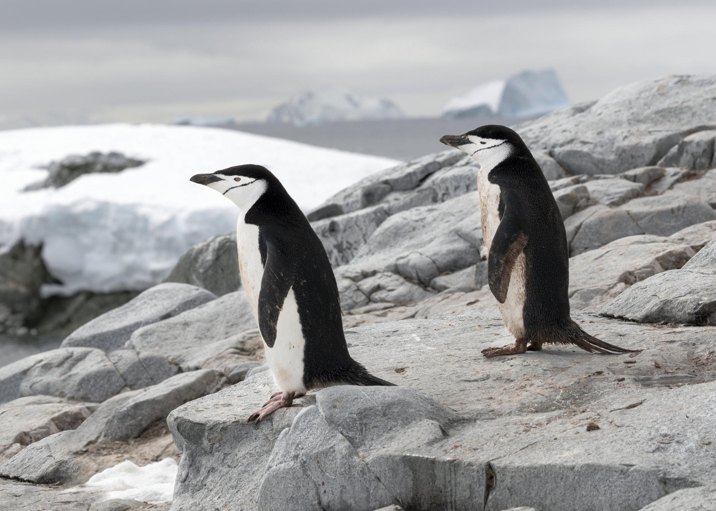 penguin24.jpg
