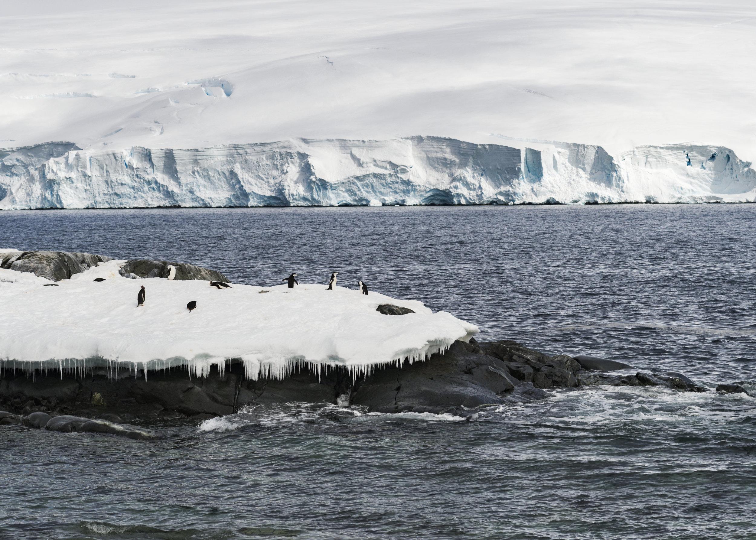 penguin23.jpg