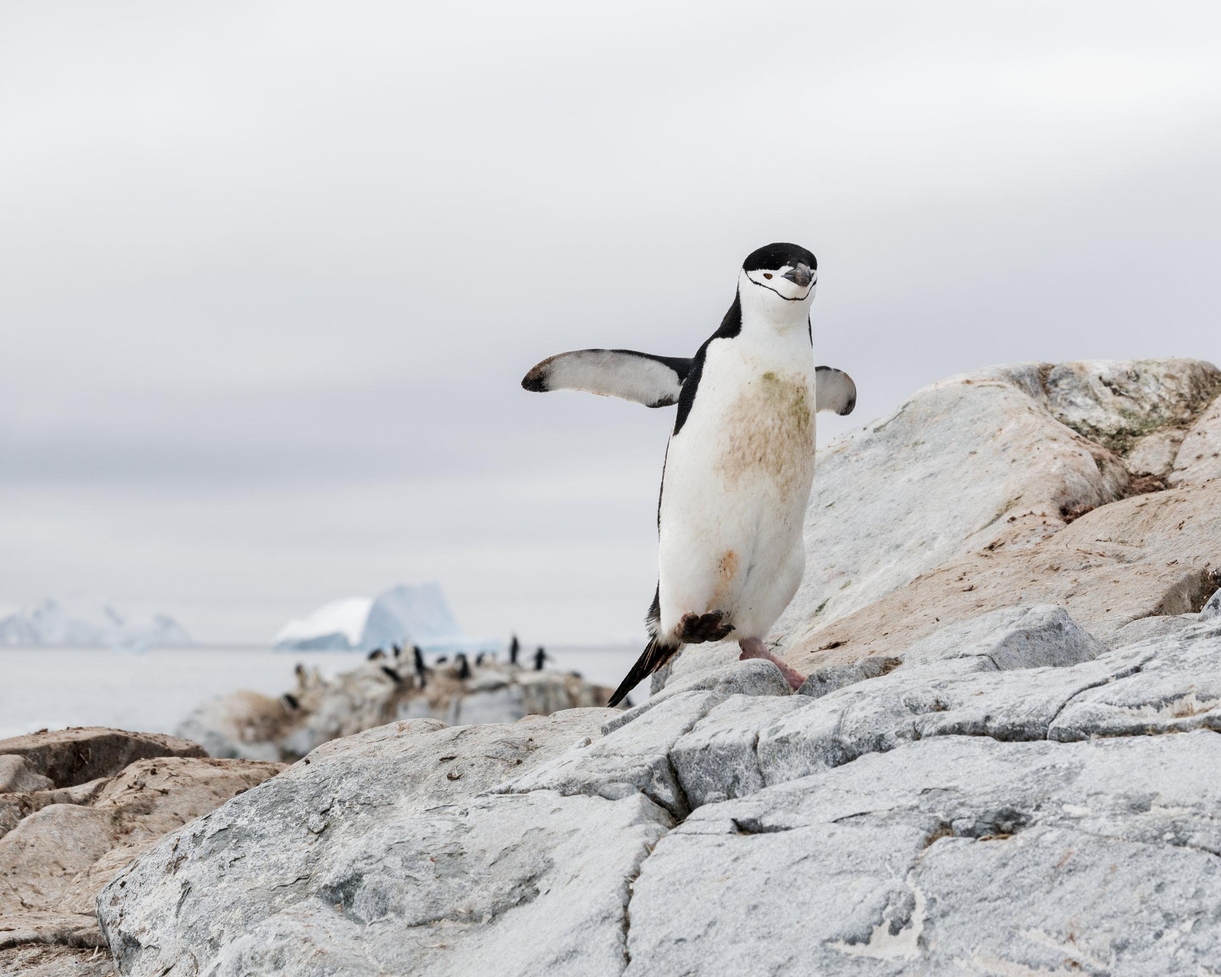 penguin26.jpg
