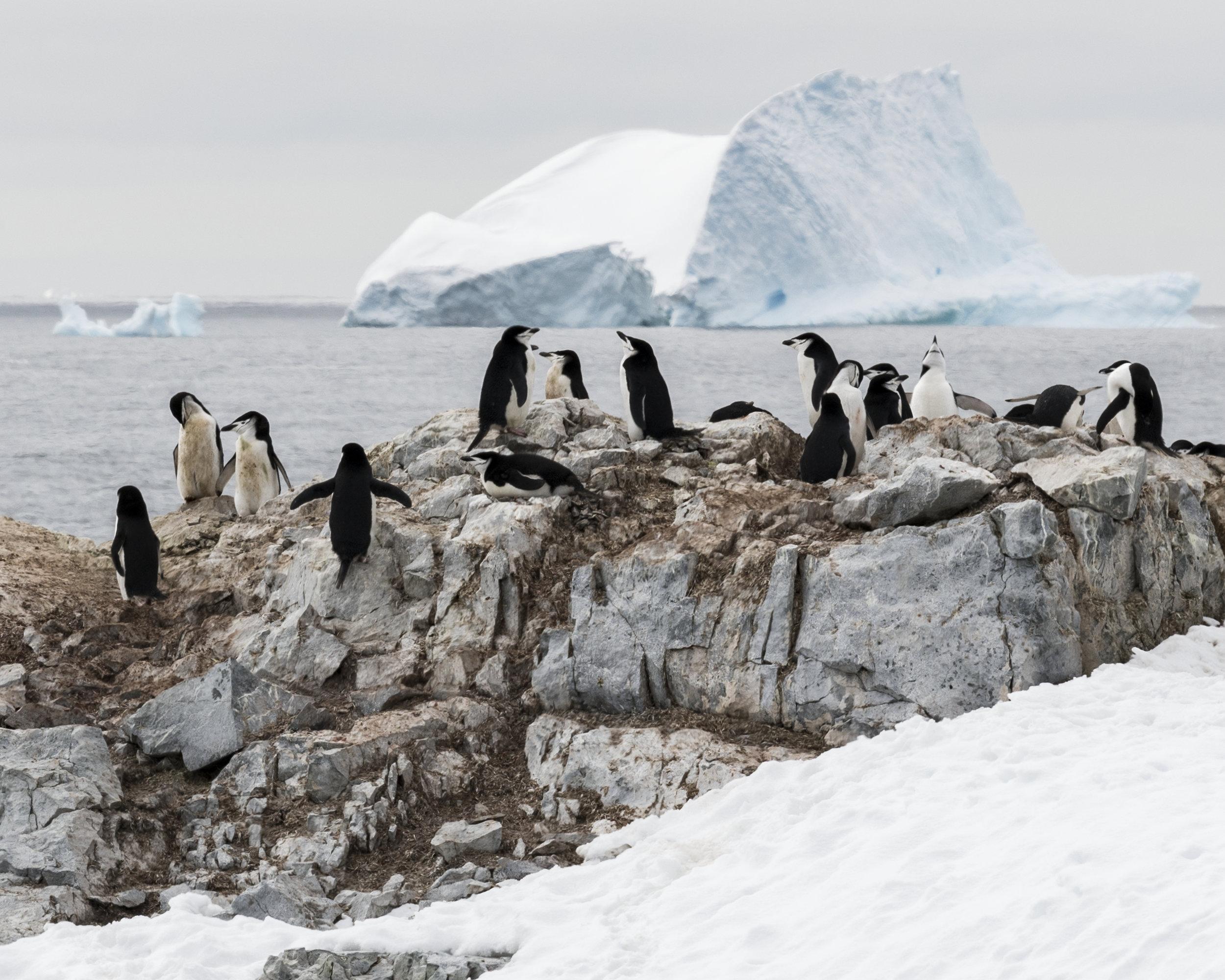 penguin27.jpg