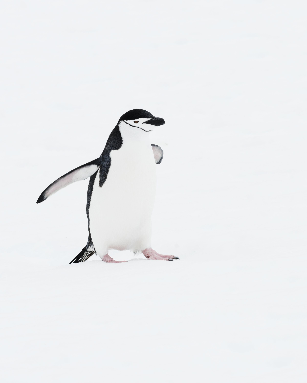 penguin30.jpg
