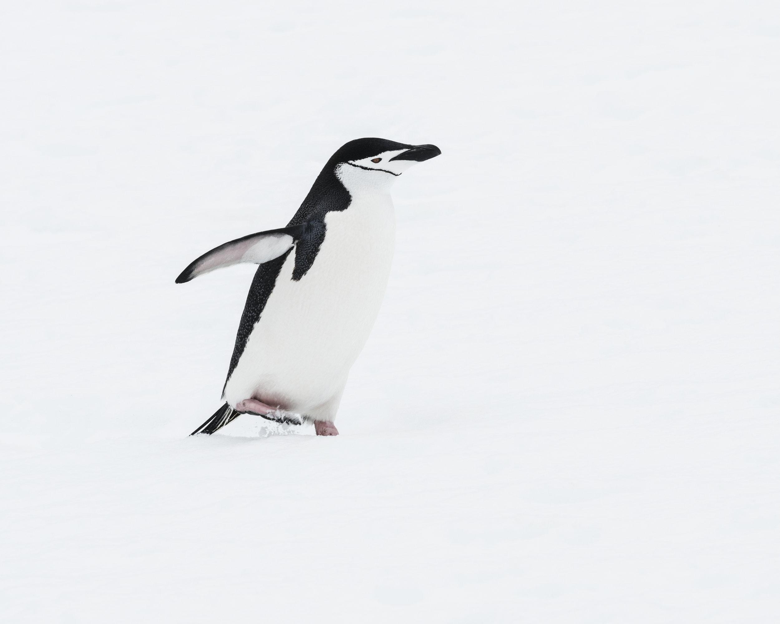 penguin31.jpg