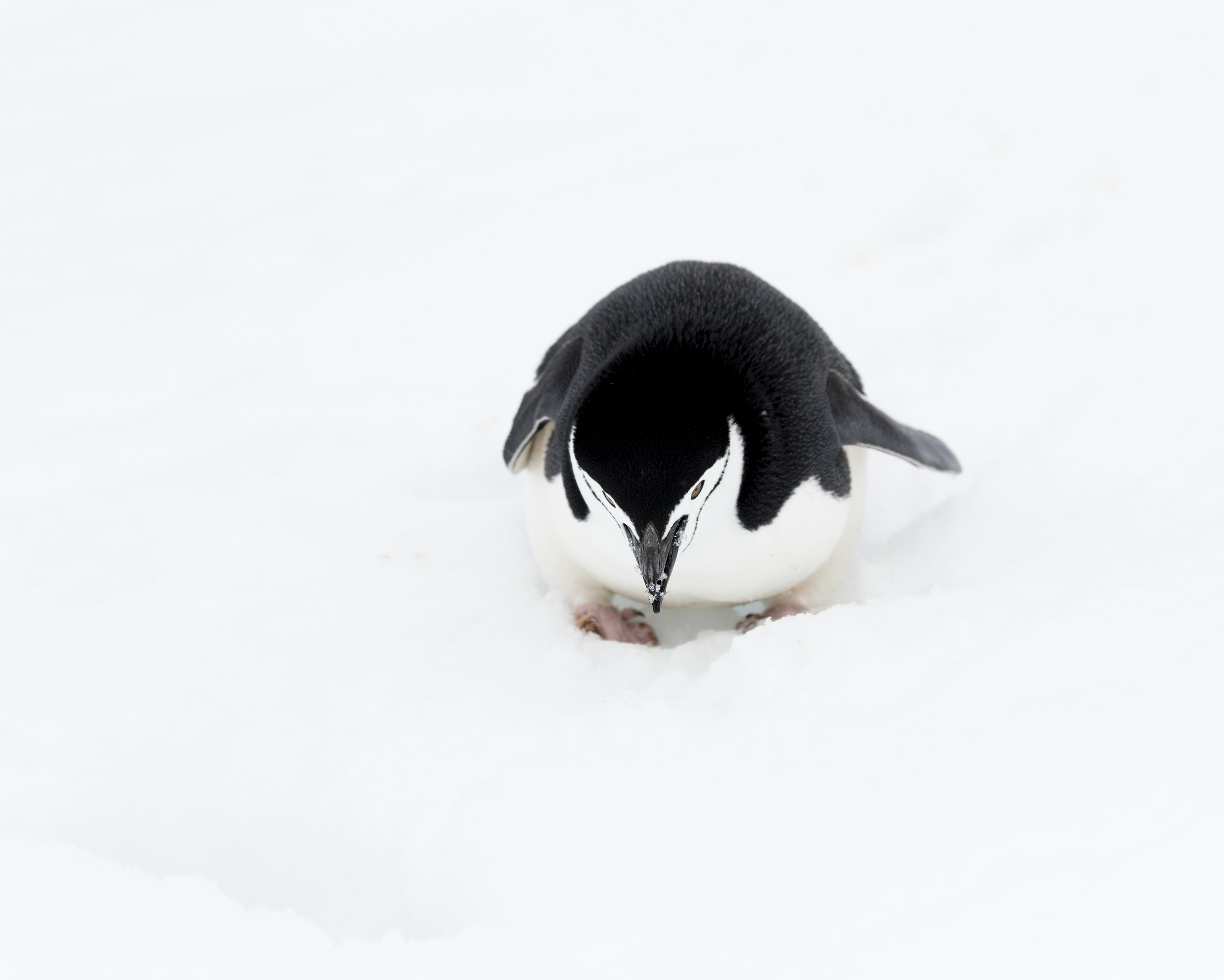 penguin33.jpg