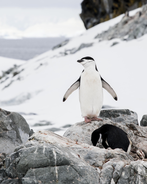 penguin32.jpg