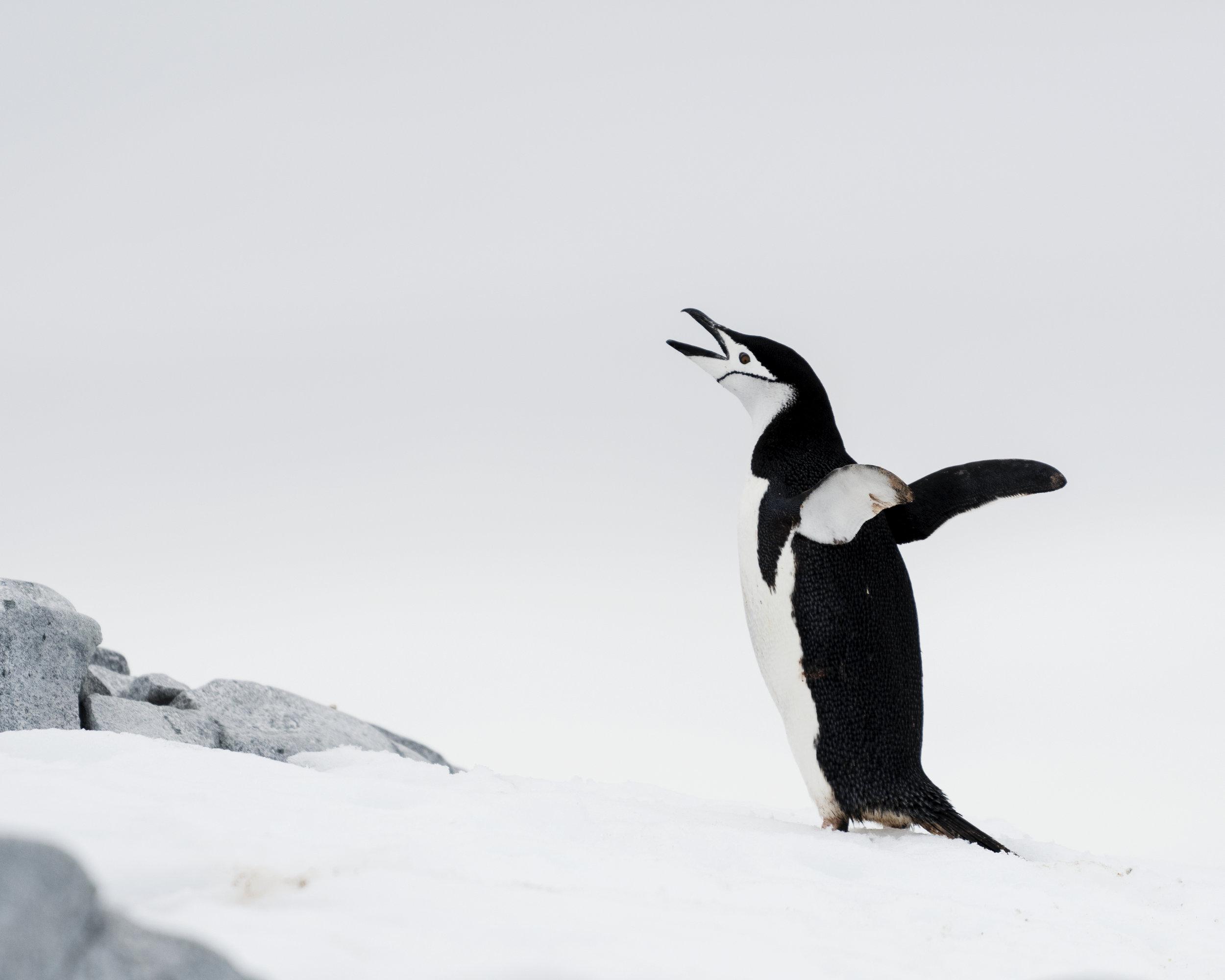 penguin35.jpg