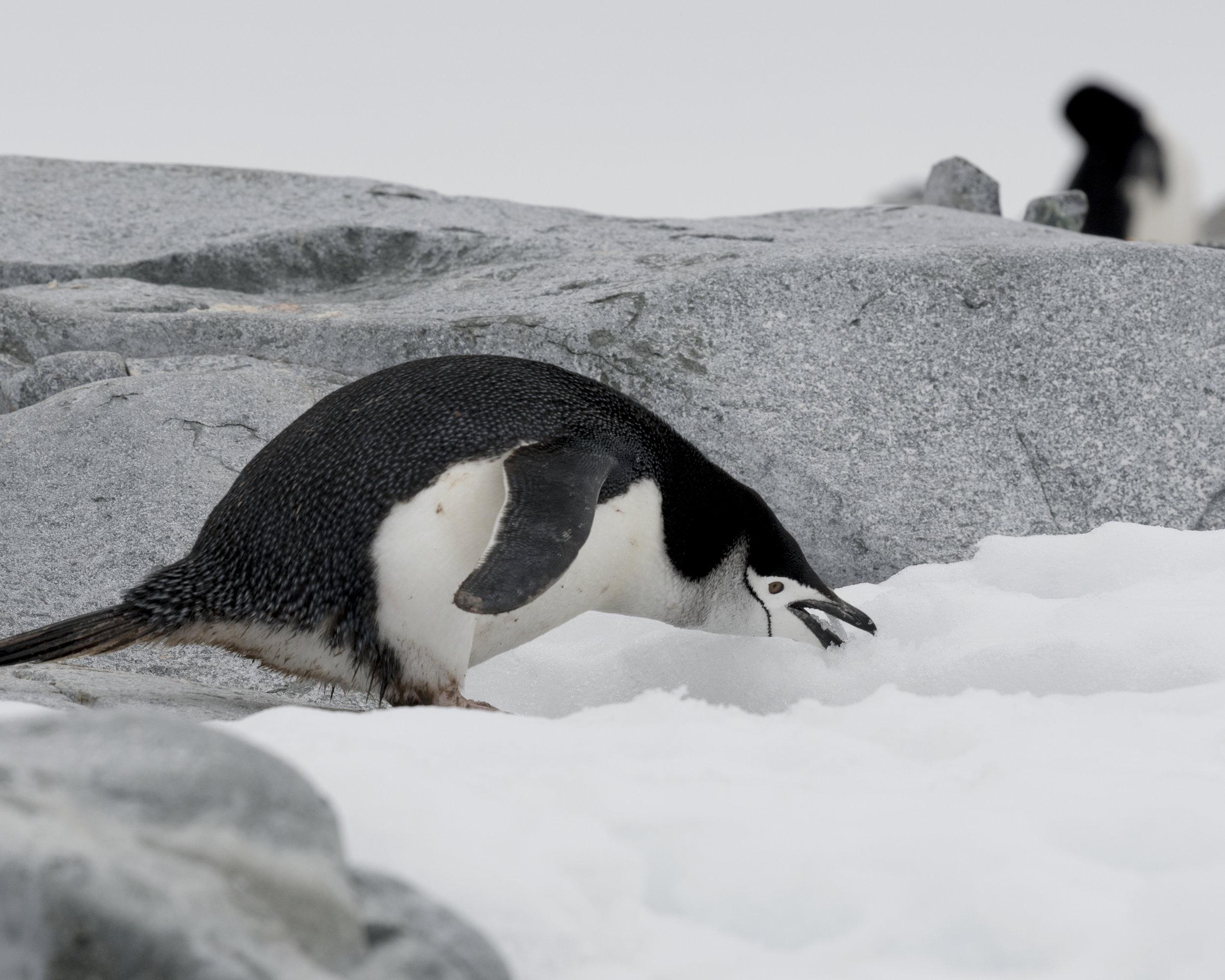 penguin34.jpg