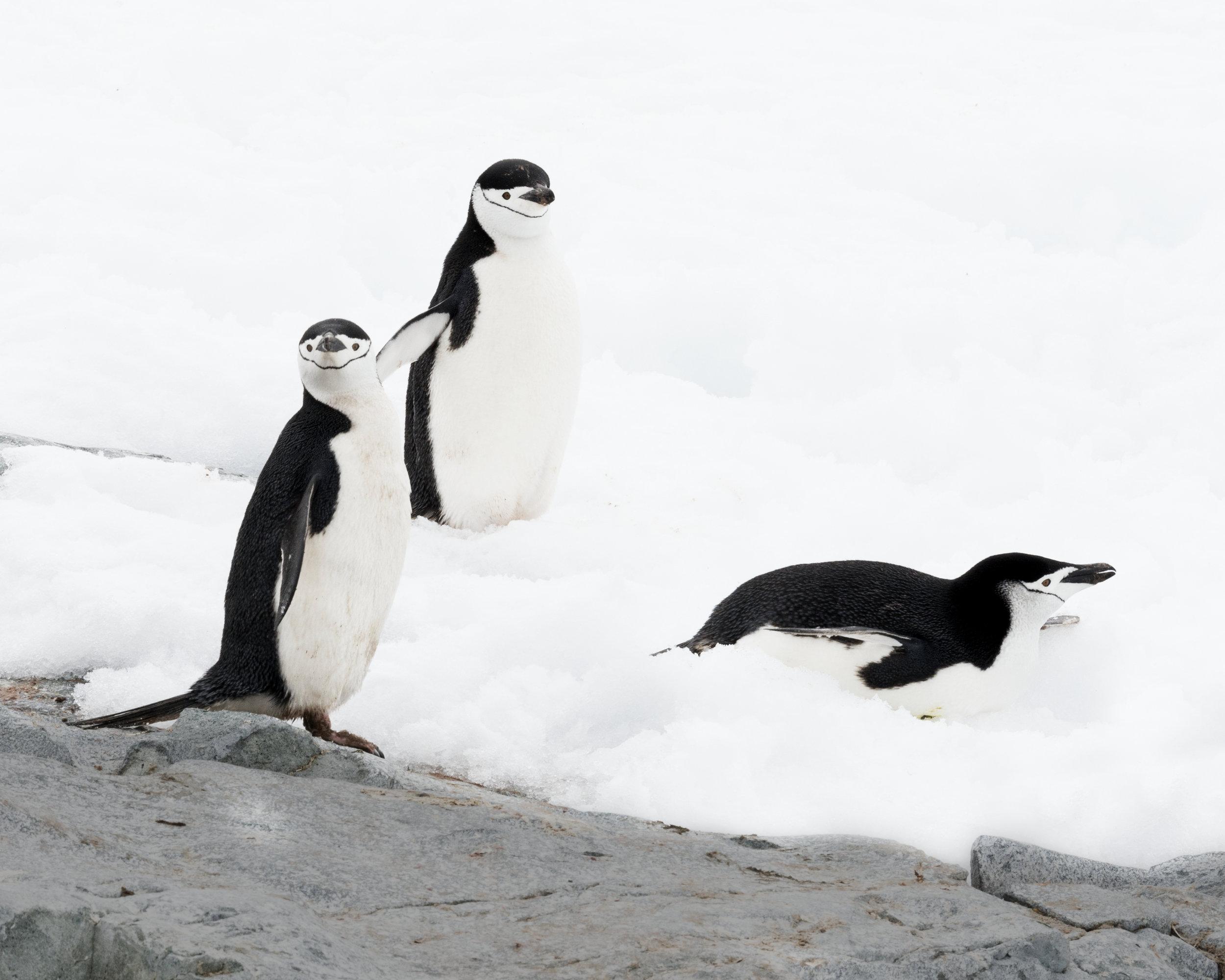 penguin41.jpg
