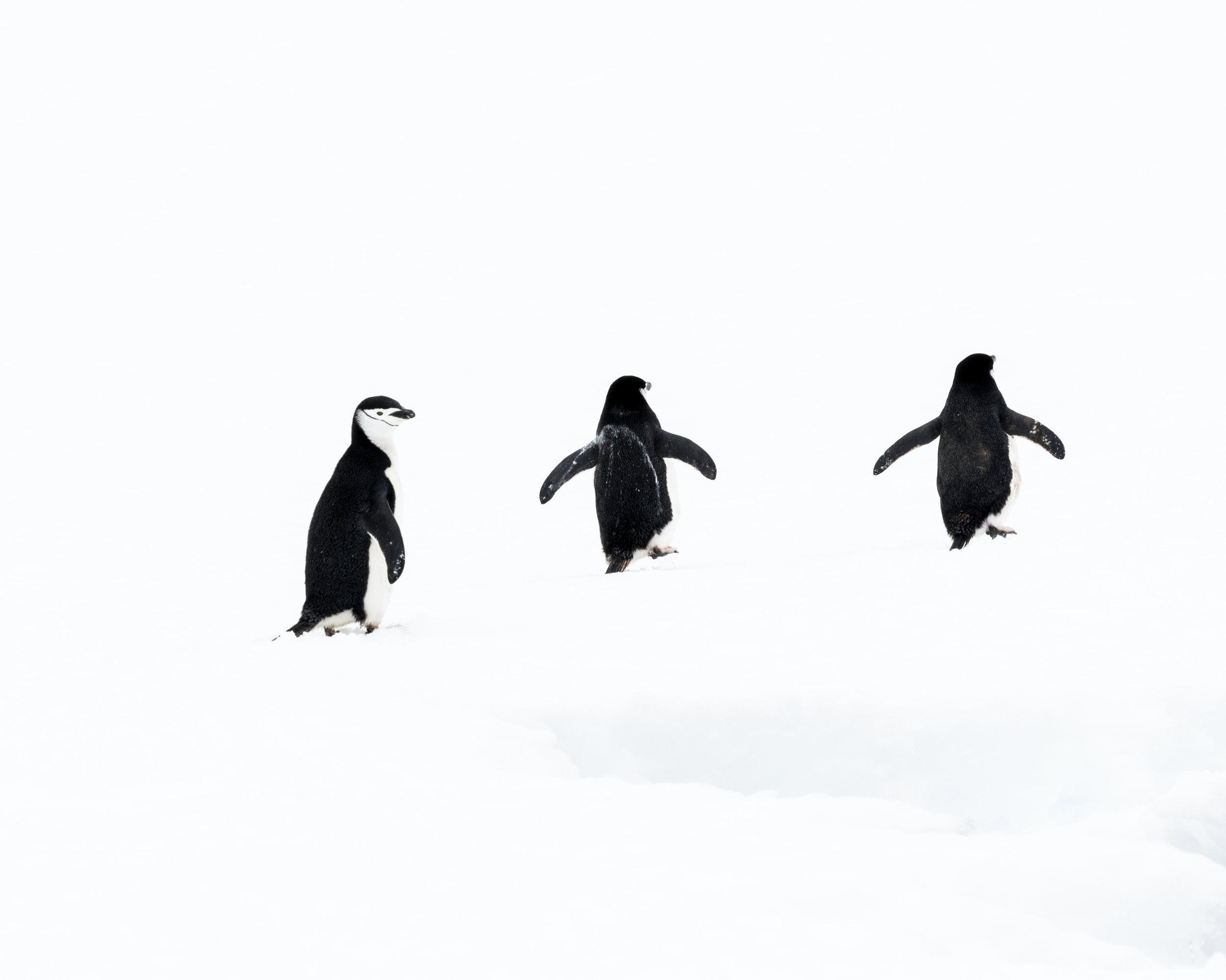 penguin43.jpg