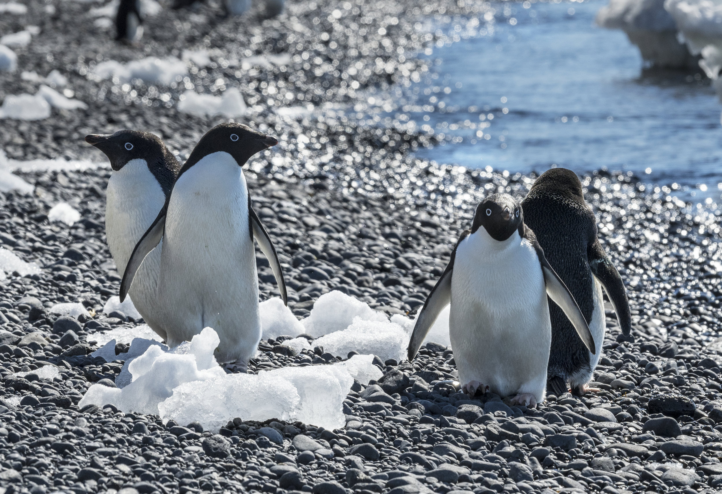 penguin45.jpg