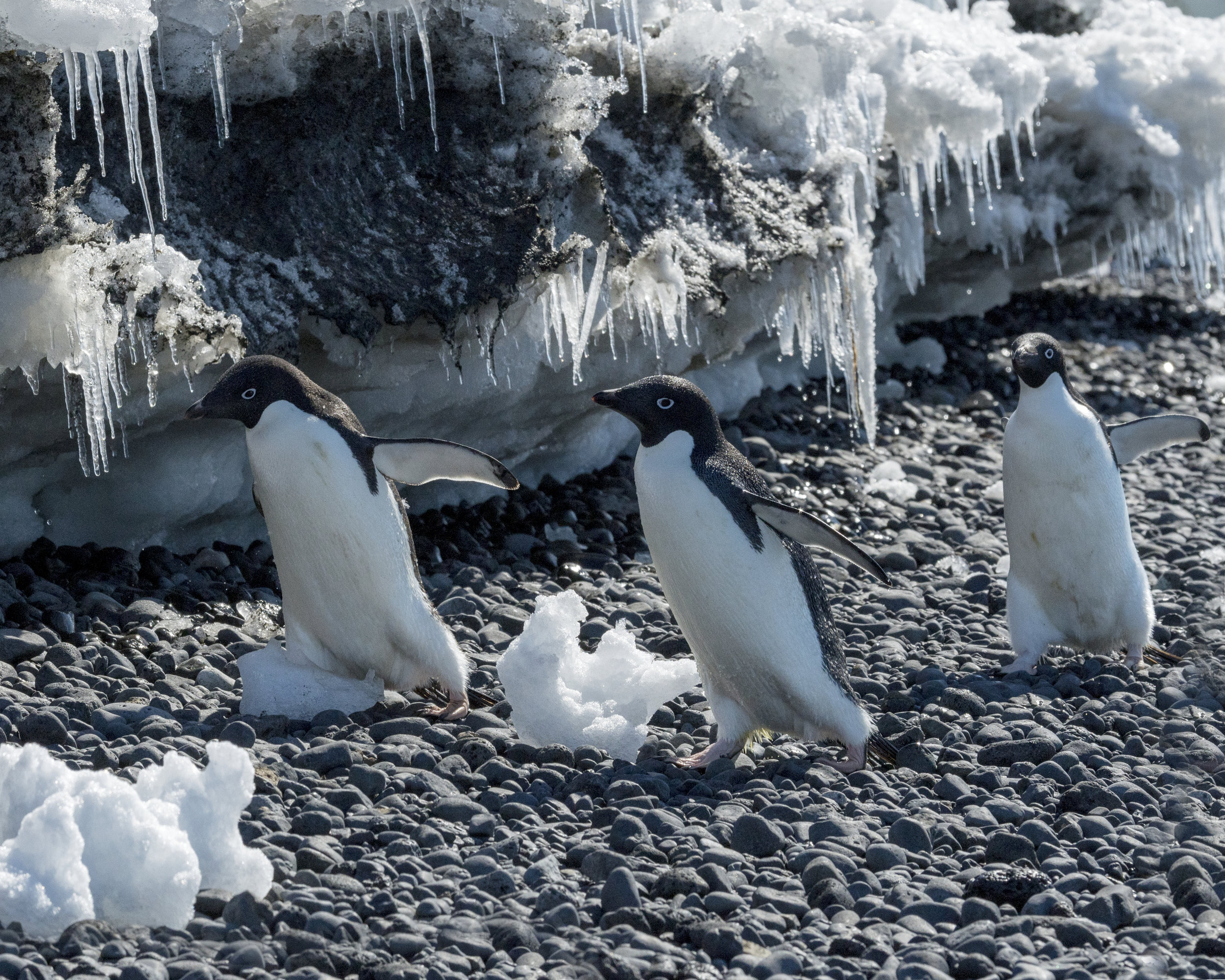 penguin50.jpg