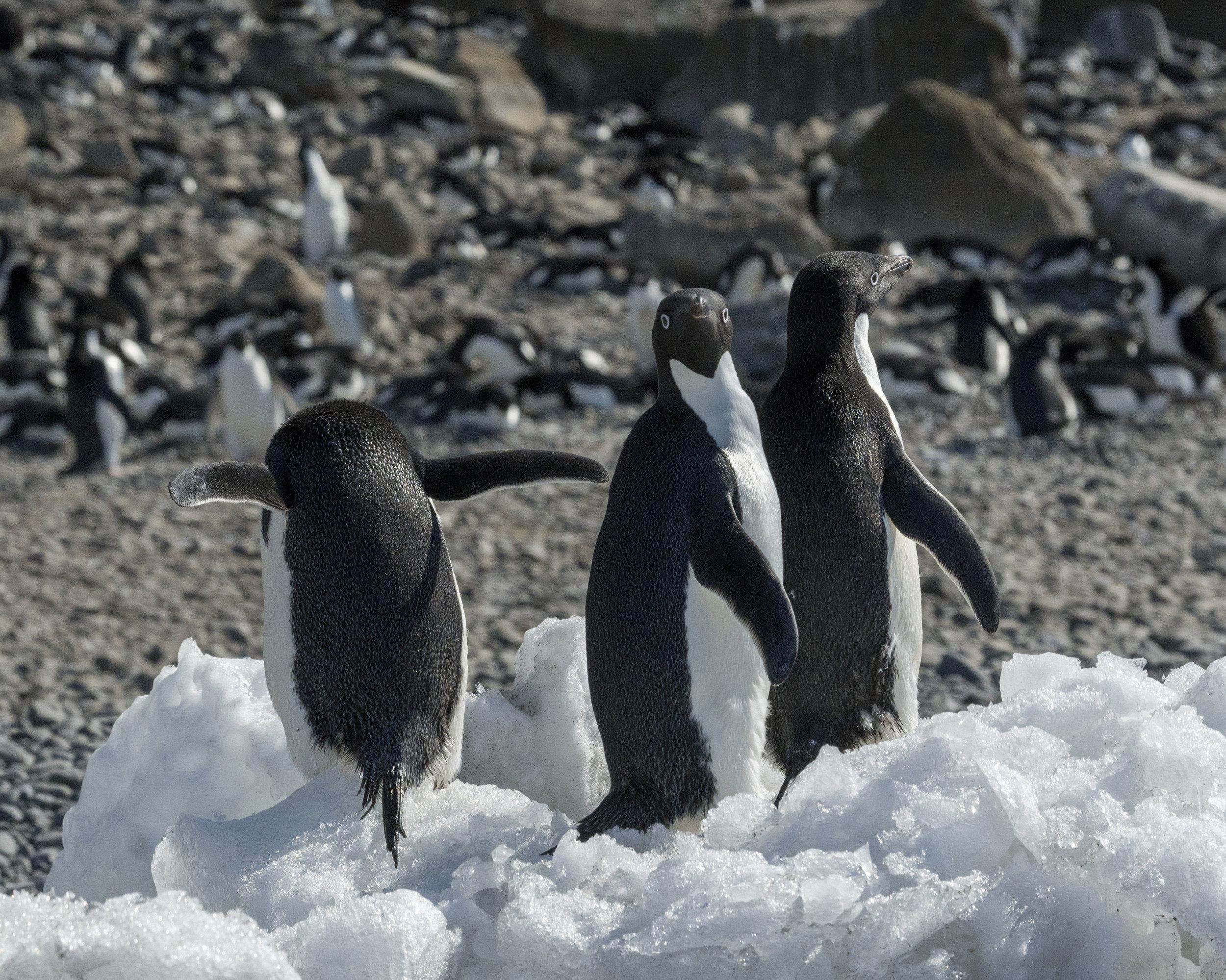 penguin51.jpg
