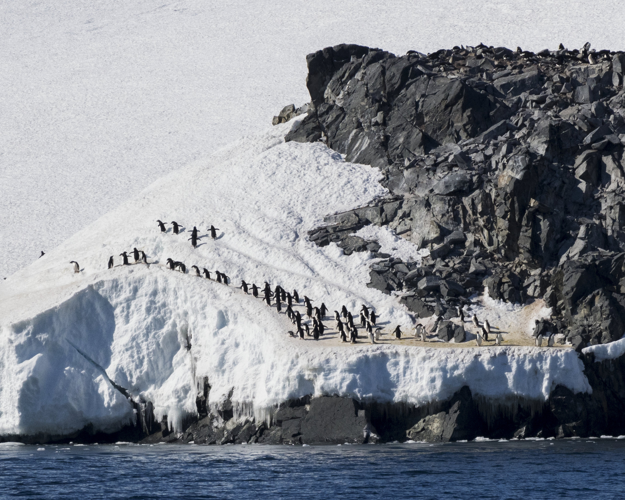 penguin53.jpg