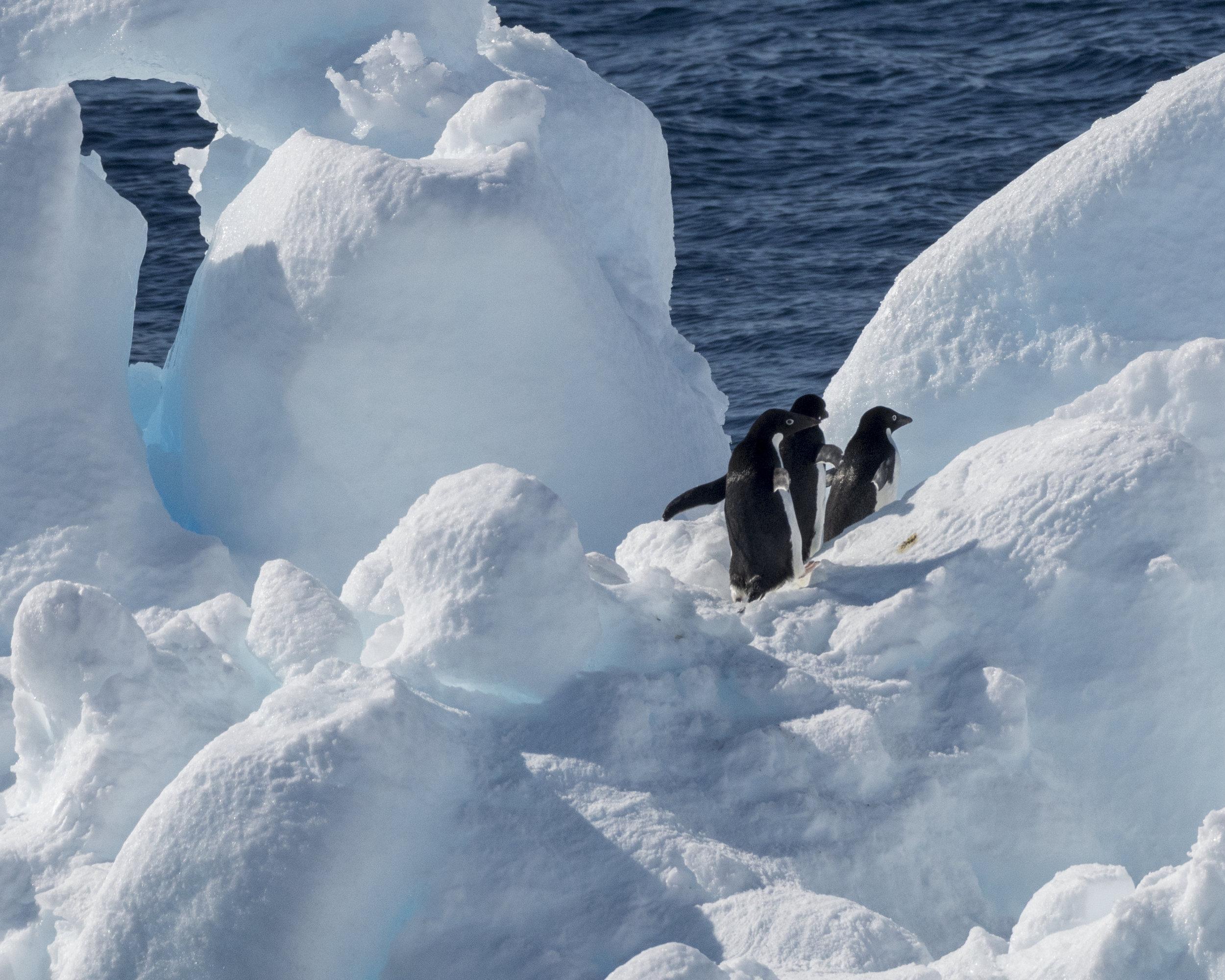 penguin54.jpg