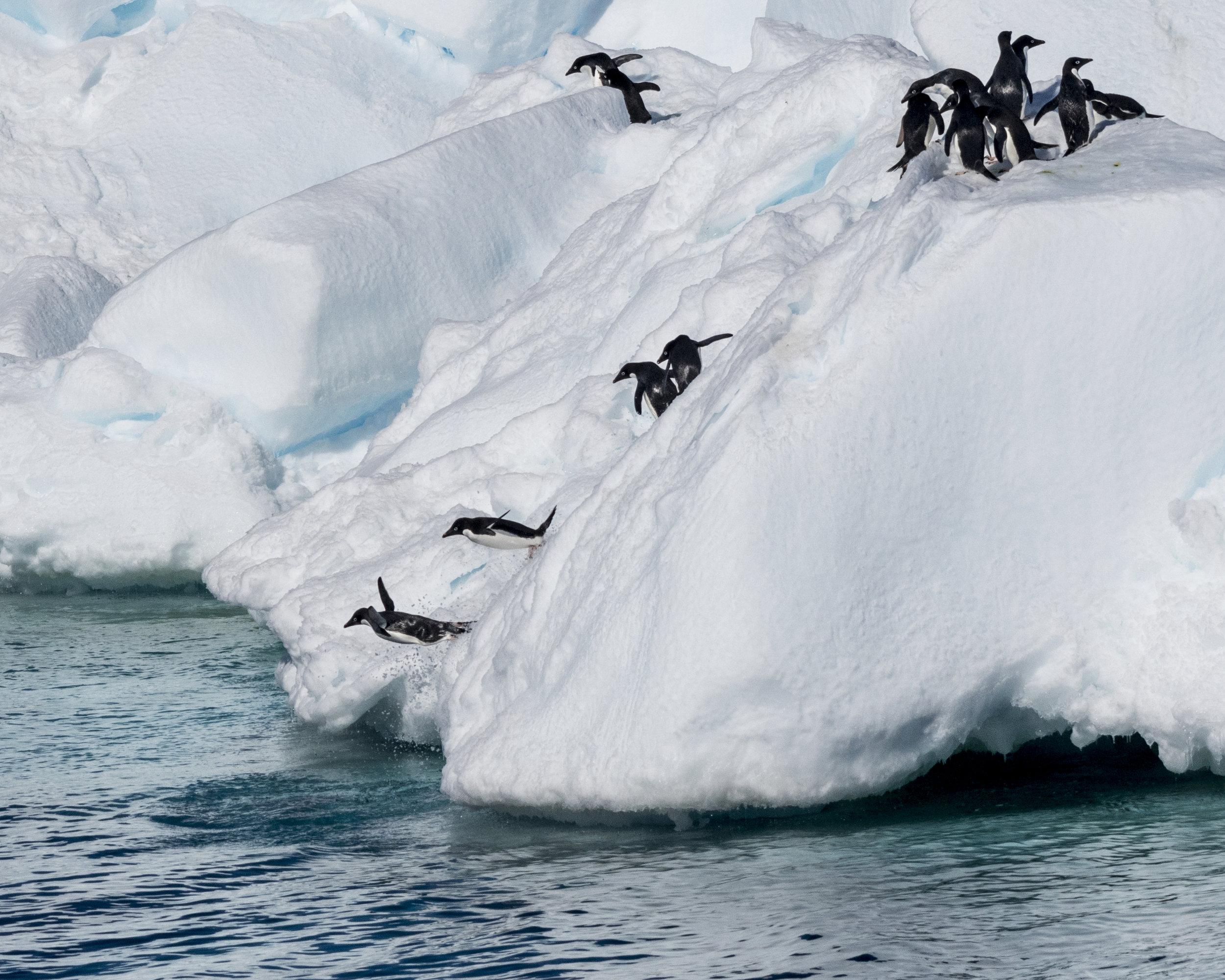 penguin55.jpg
