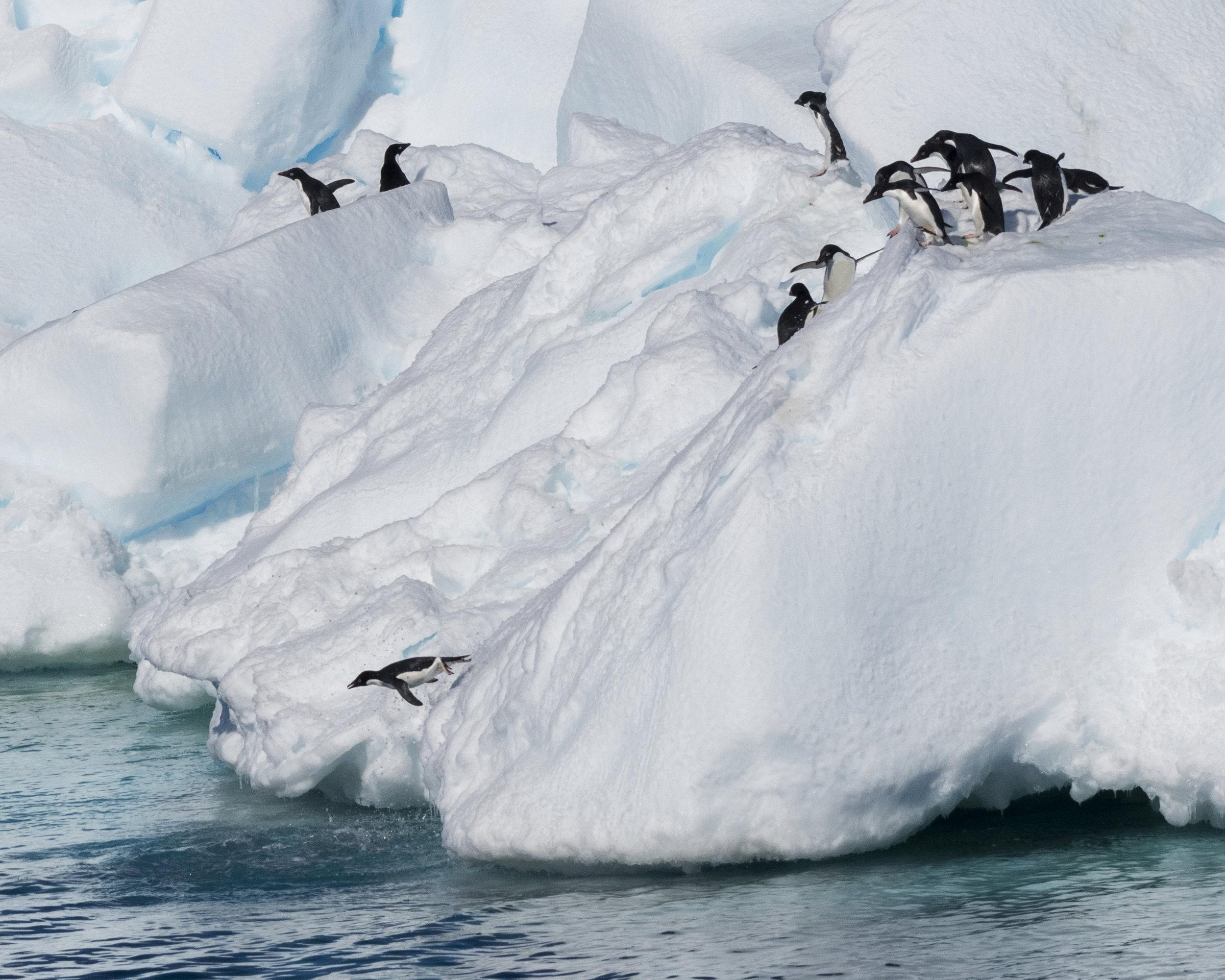penguin57.jpg
