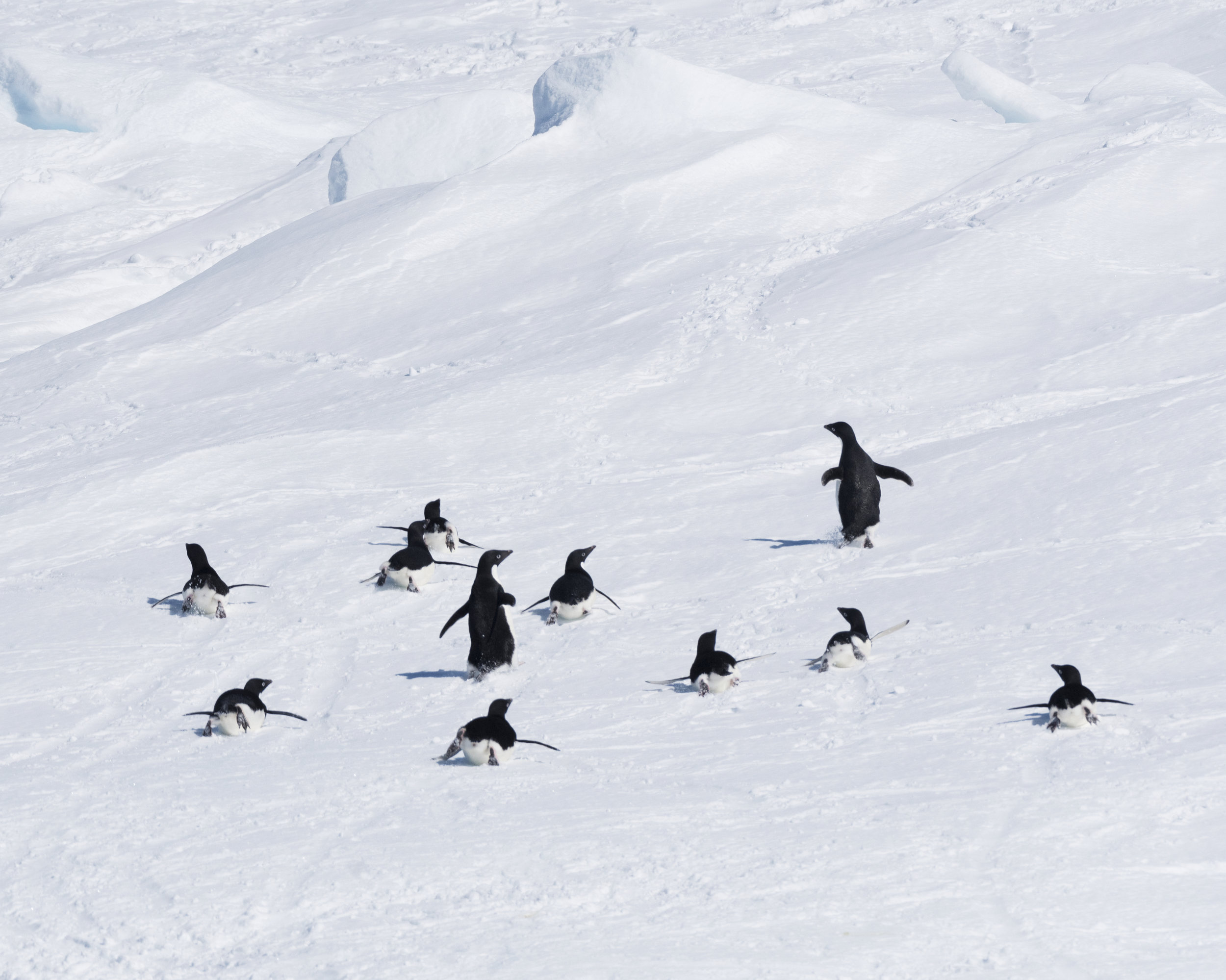 penguin61.jpg