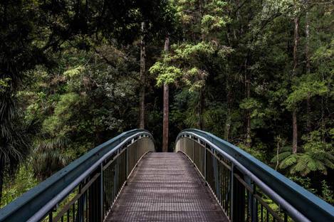 bridge to trees.jpg