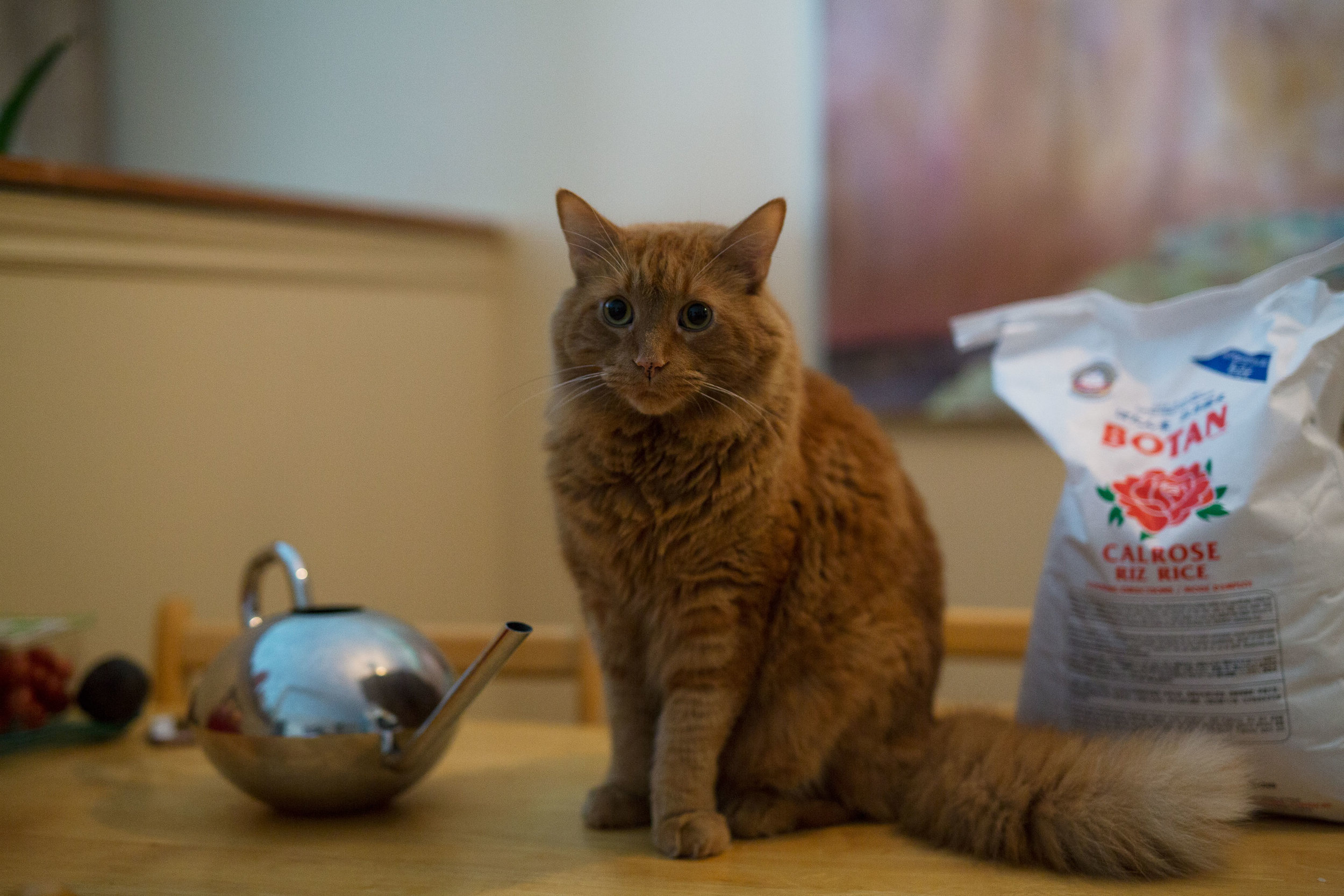 Briony Smith's cat on the counter