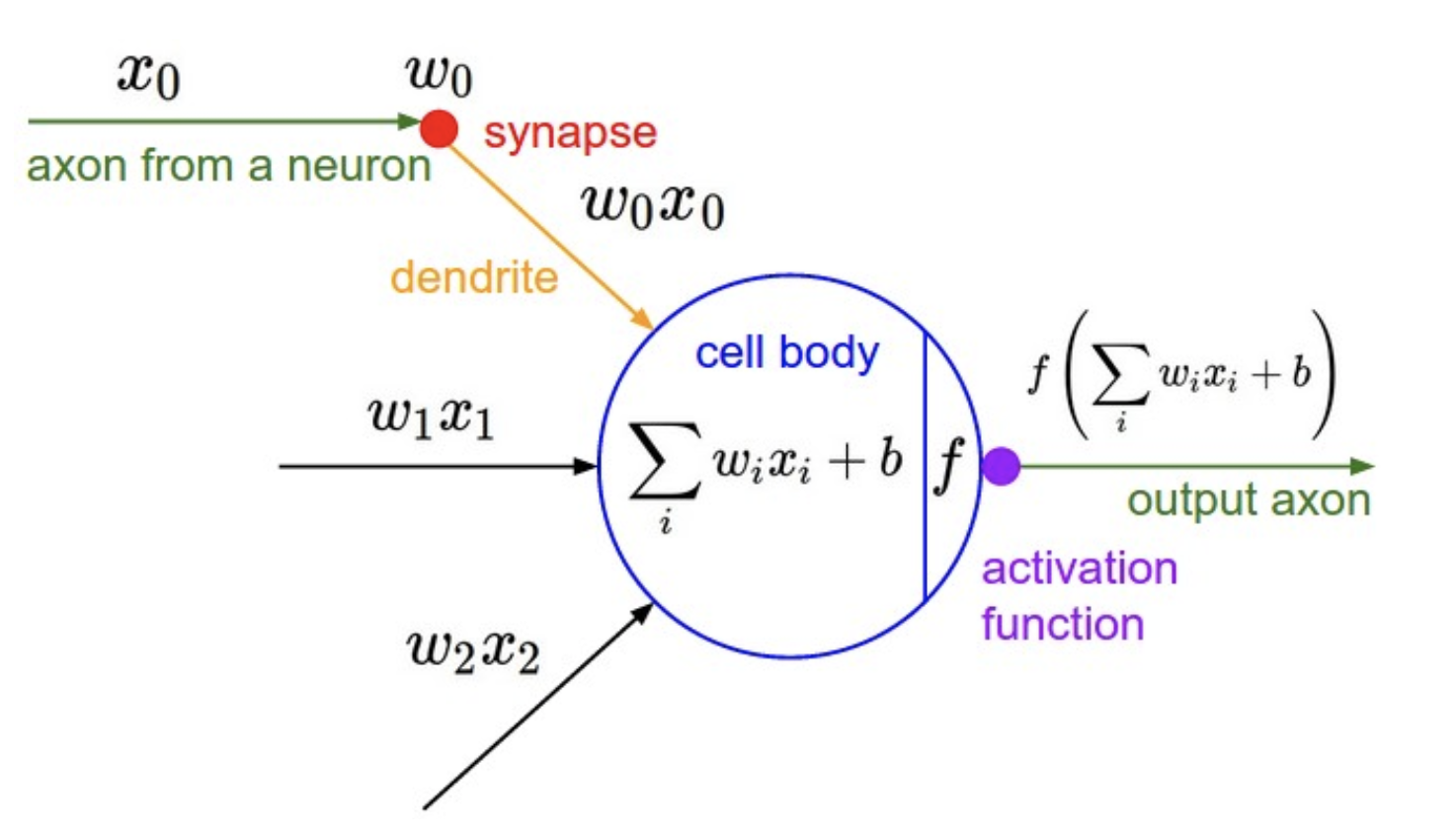 How a neuron is modeled as a mathematical function.    Source:    http://cs231n.github.io/neural-networks-1/