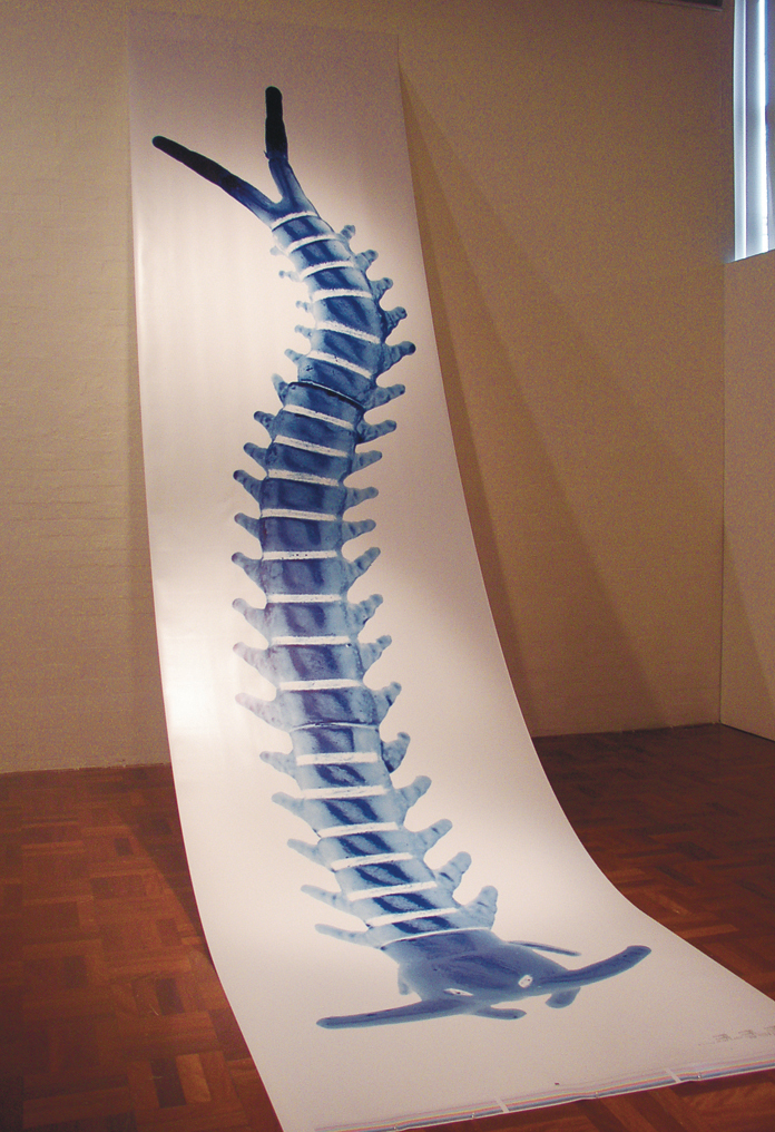 Erica Seccombe, Creaturepede 2004, inkjet print on satin paper, 90 x 600cm. image from exhibition 2x4 for the 2004 Masters and PHD graduation ANU School of Art Gallery, 29 April - 1 May 2004.