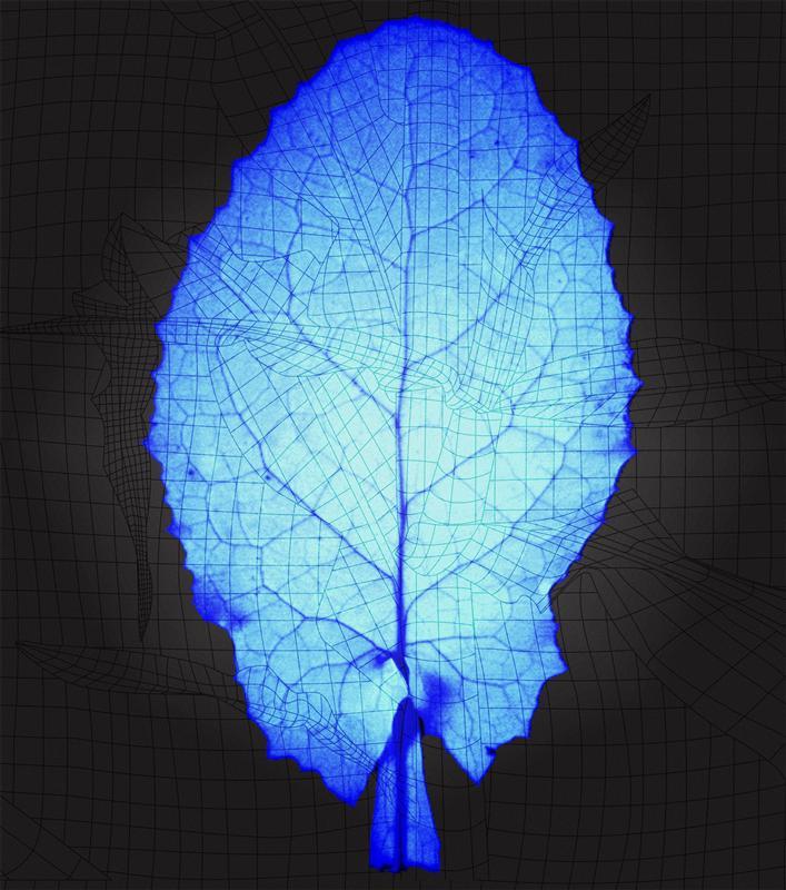Radiance, 2010, installation panel series, no#1.