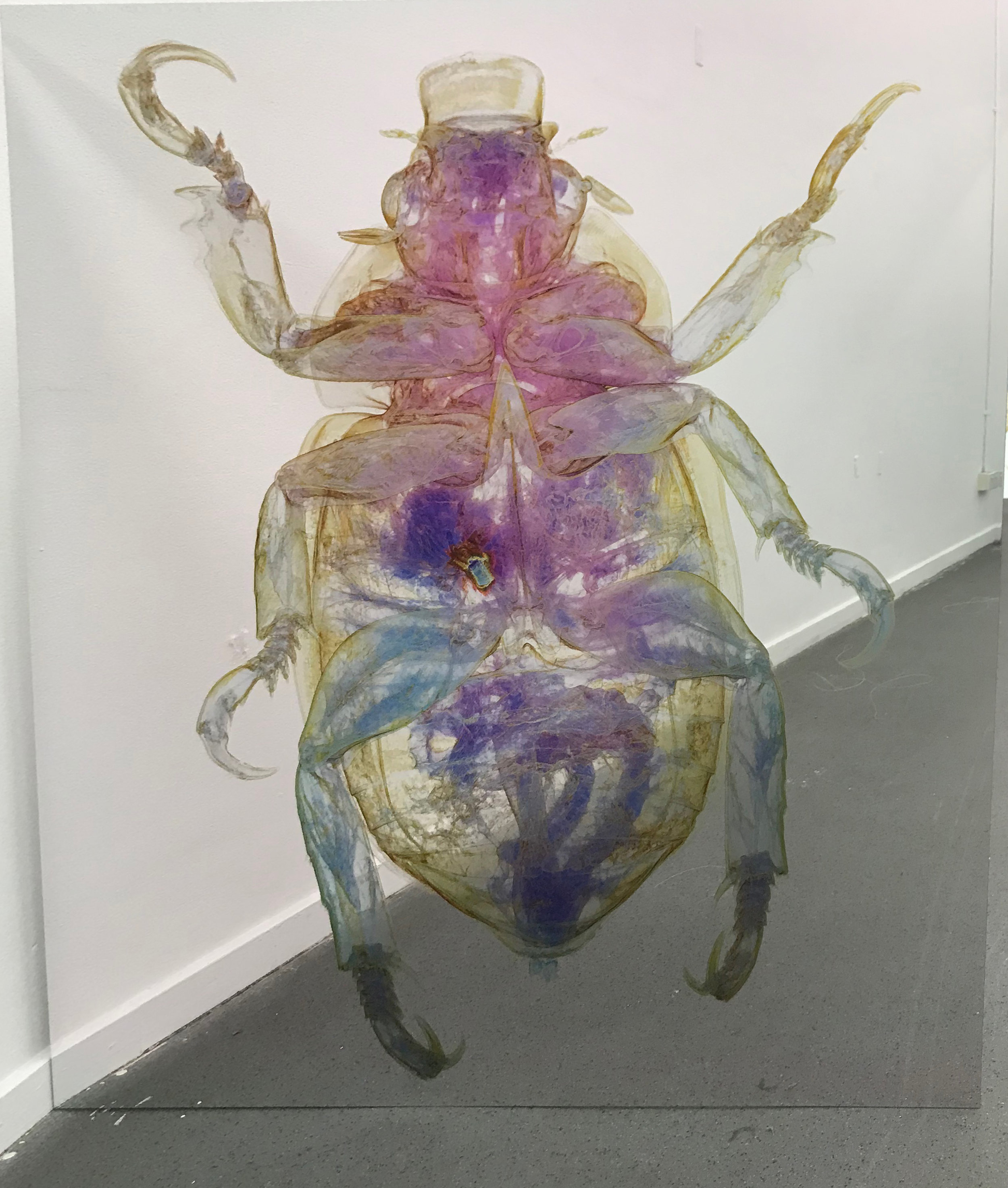 Erica Seccombe,  Christmas Beetle, (back), 2018,  123 x 110 cm, Mirrored composite board.