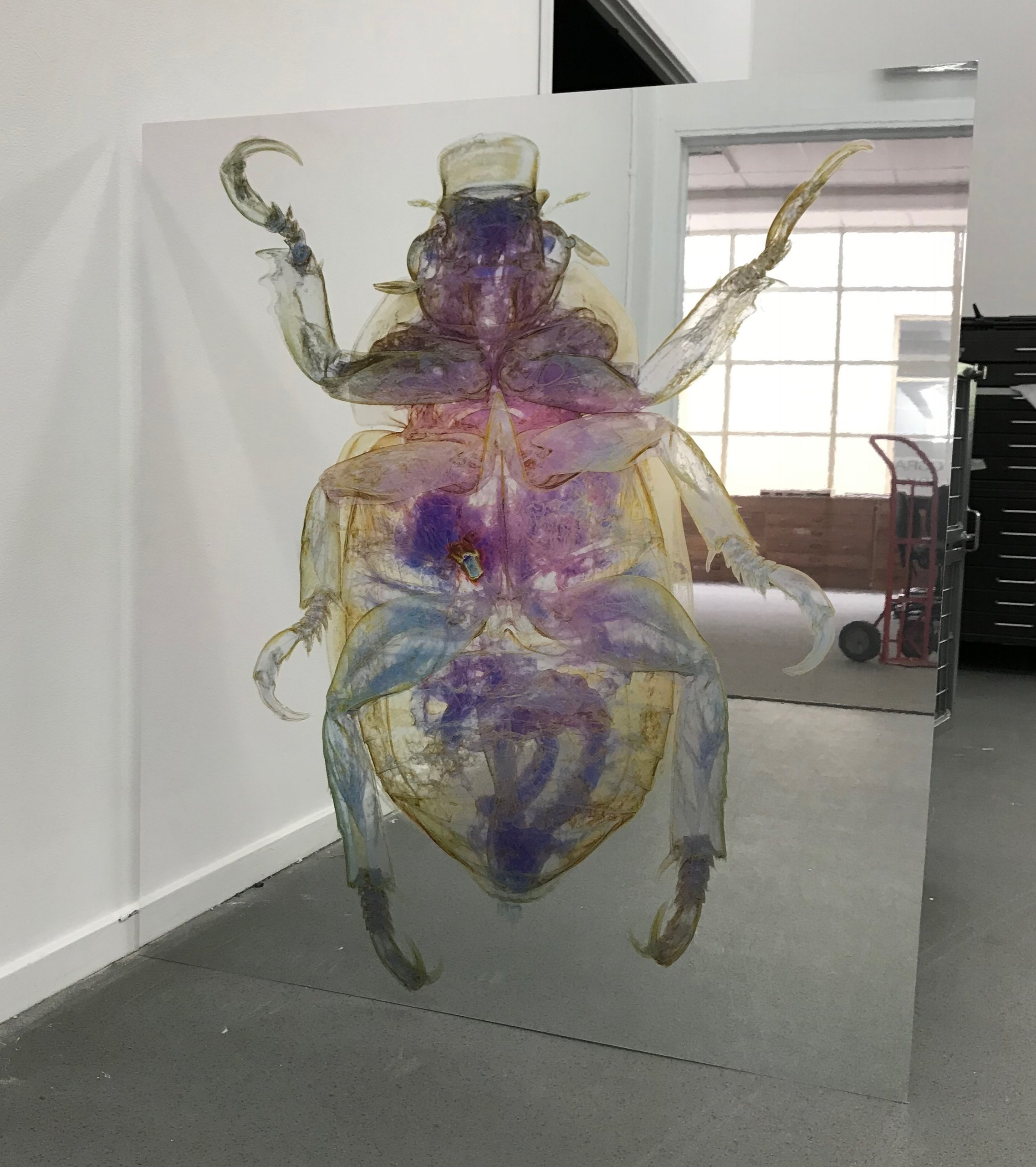 Erica Seccombe,  Christmas Beetle,    123 x 110 cm, inkjet print on Mirrored composite board.