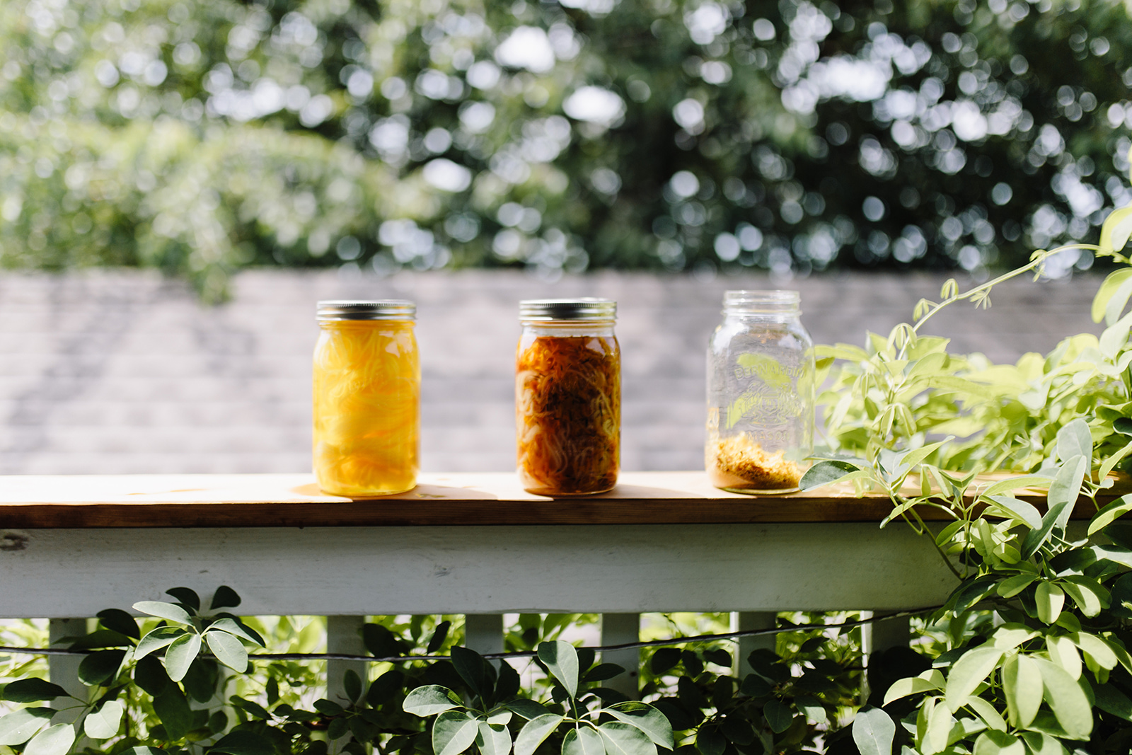 gathering the natural dyestuffs for your solar dye. shown here are marigolds collected from the garden