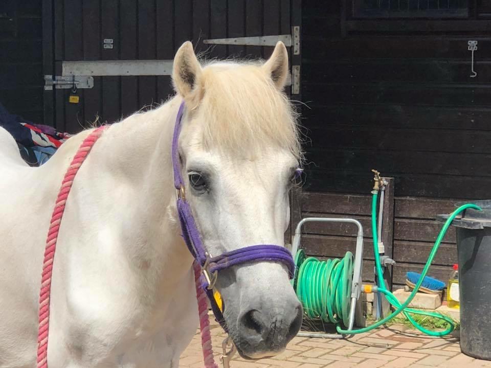 Pepper the horse