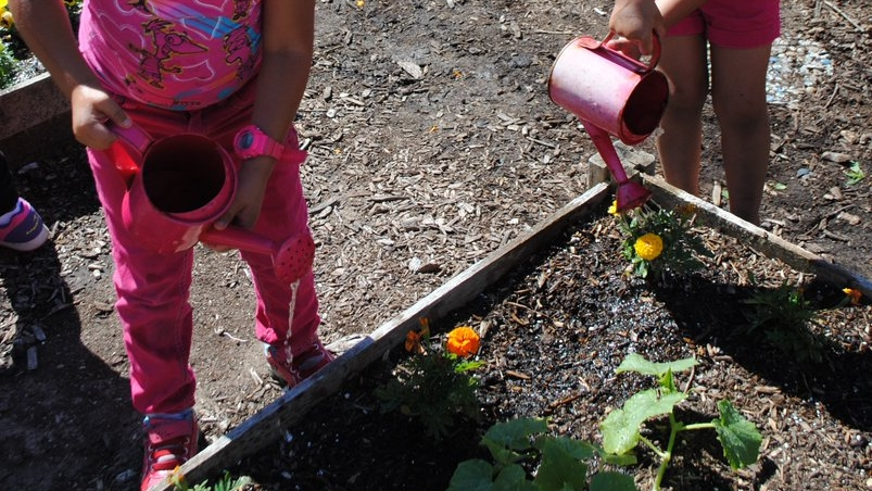 Curriculum - We provide a top of the line curriculum to ensure that the children learn and grow the most out of the garden experience. You can preview the additional activities accompanying the curriculum here.