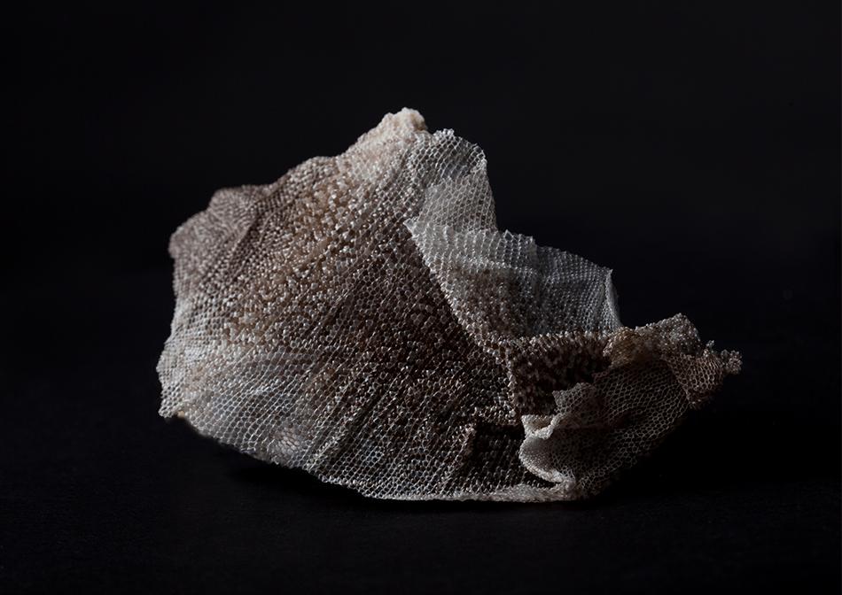 Chloe Bowman - Varanus Acanthurus Skin, Web.jpg