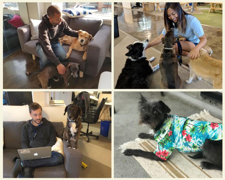 dogs-of-eventbase-2018.jpg