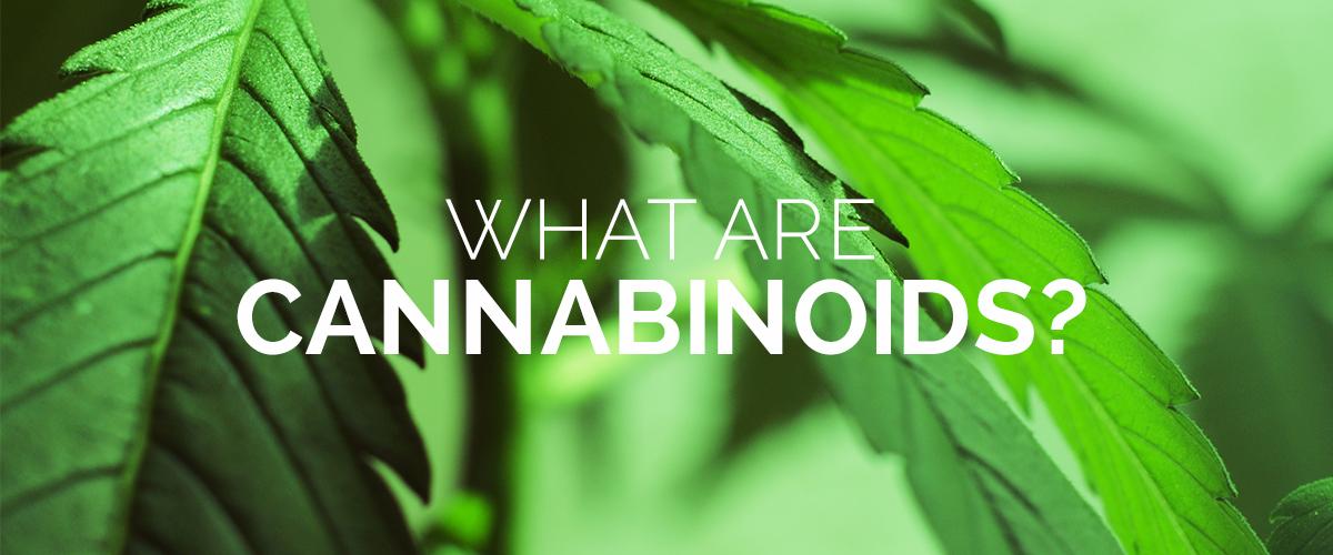 WHAT-ARE-CANNABINOIDS.jpg