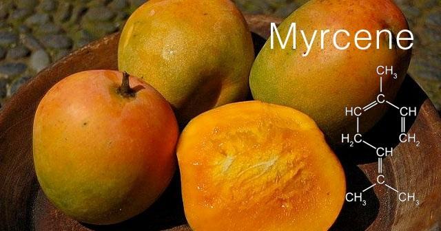 mycrene.jpg