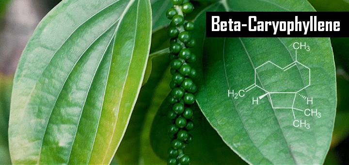 Caryophyllene.jpg