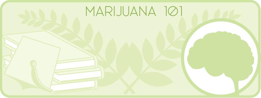 Marijuana 101.png