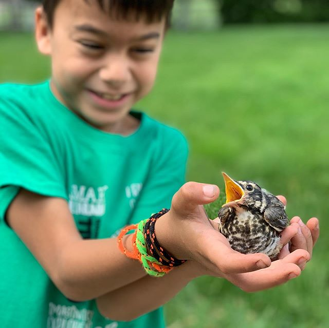 "We tried to release Edward's rescue bird today. ""Leo"" gave us a lot of attitude and then came back inside for a snack and a nap. I guess I wouldn't leave either..."