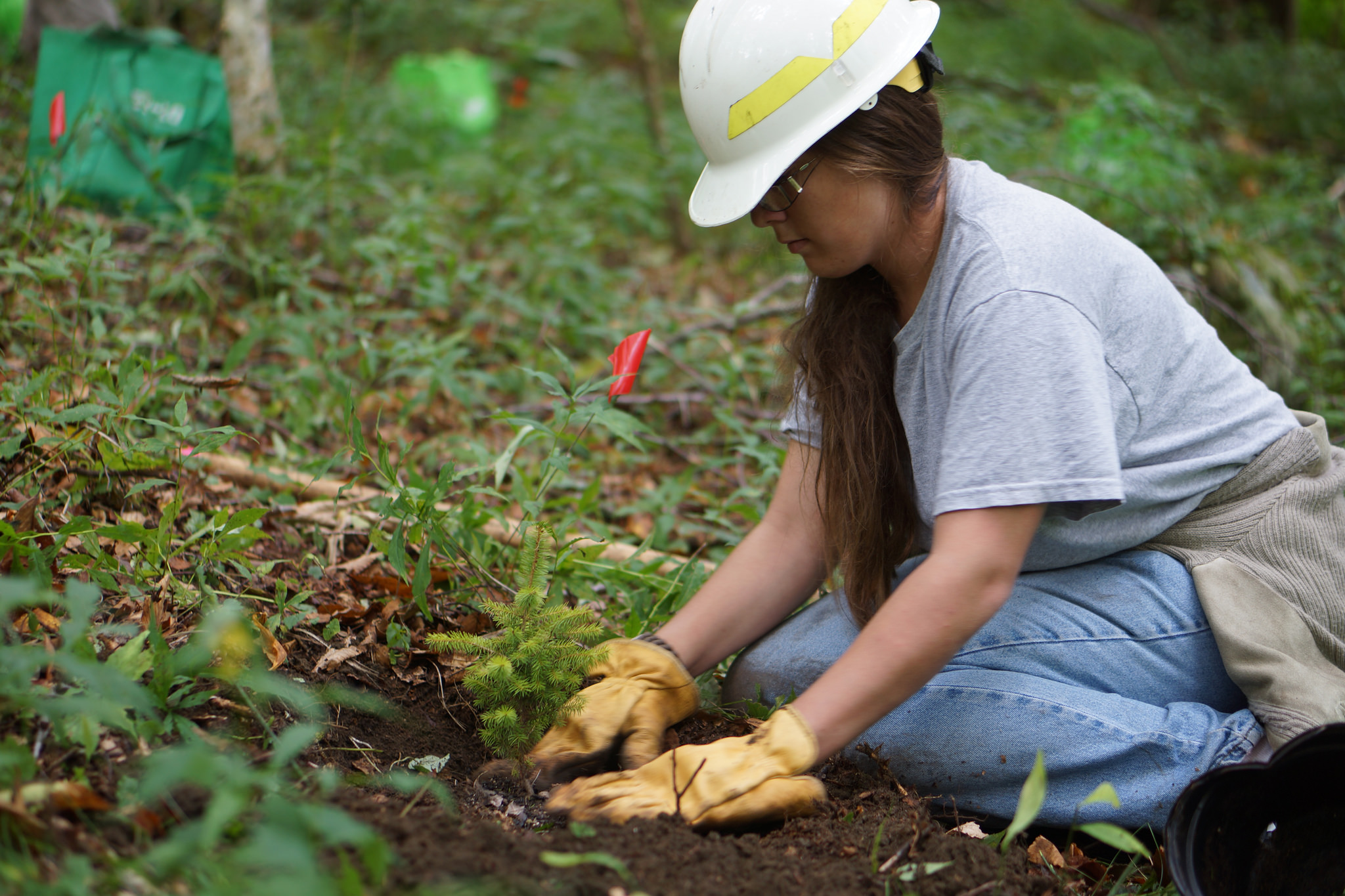 Vocational schools and community colleges teach plants through horticulture, agriculture, forestry, nursery and turf management and landscaping. - Thanks to U.S. Fish and Wildlife Service Southeast Region; Haywood Community College.