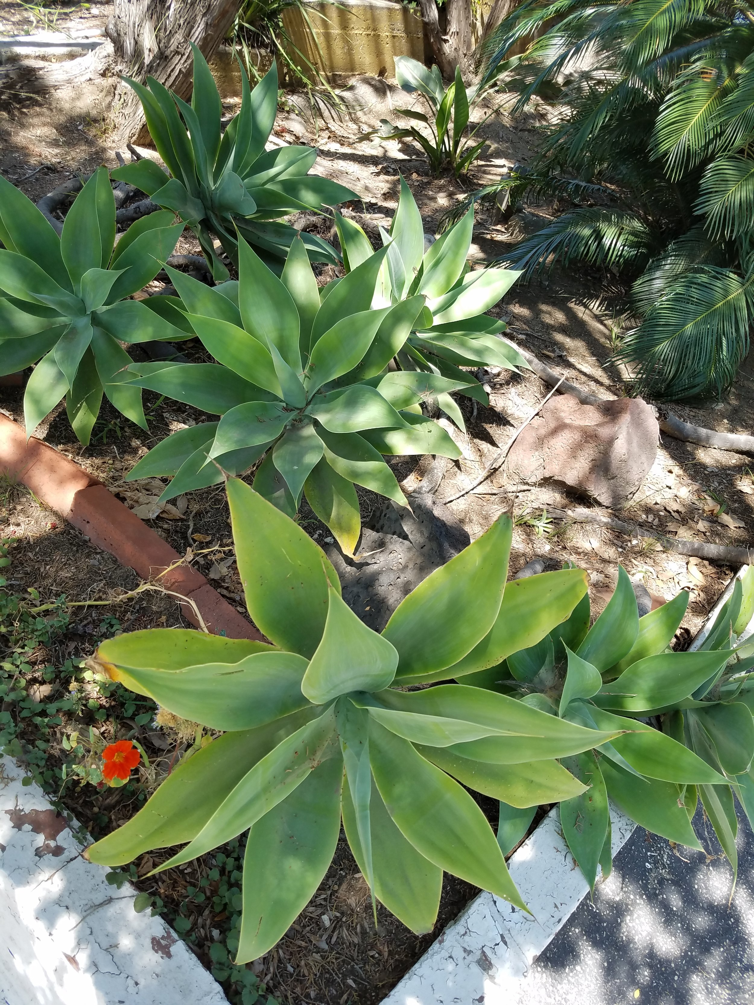 Grow plantsoutside in the ground, a pot,or maybe on a wall or raised bed. -