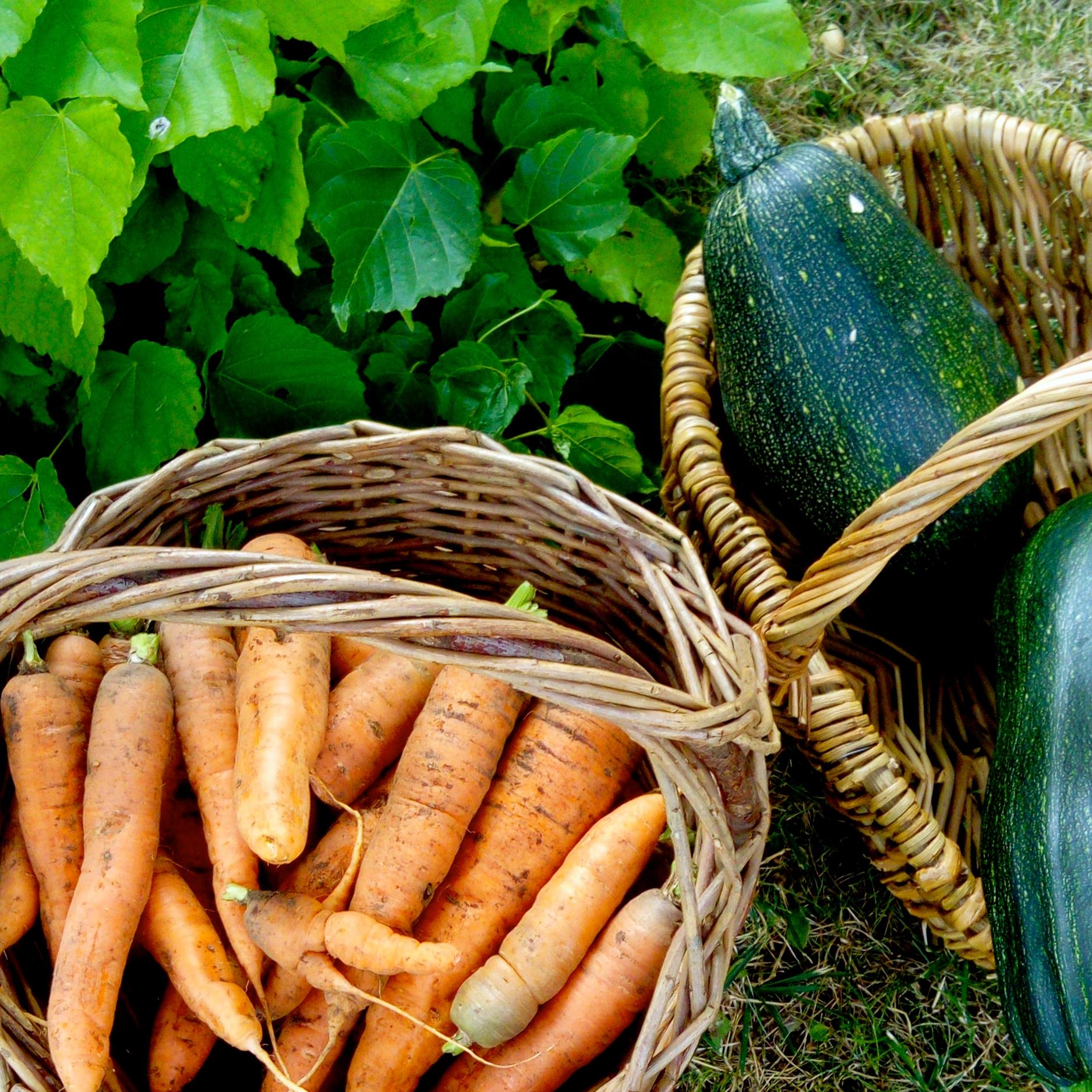 ayurveda-vegan-vegetarien-cuisine-saine