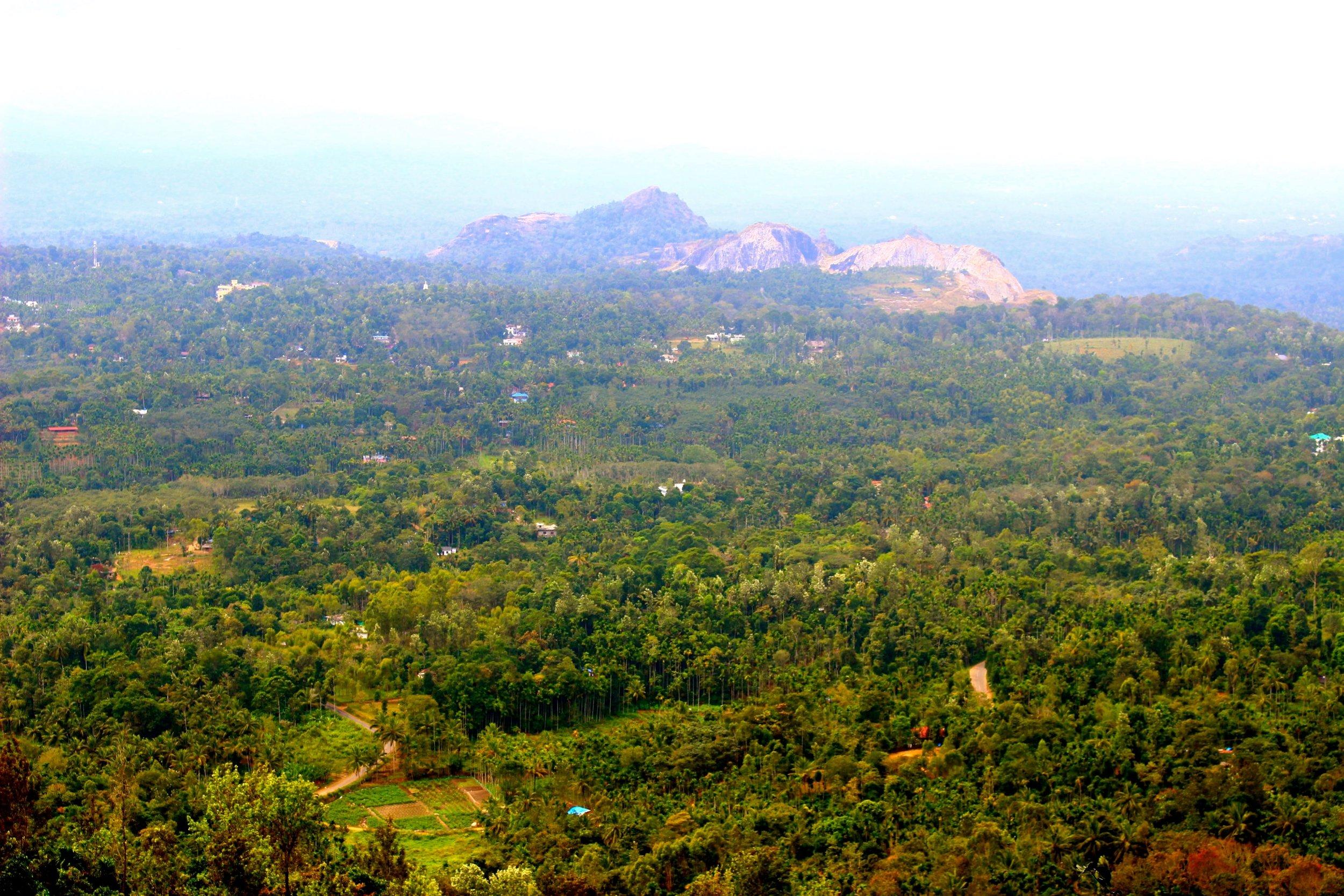 kerala-vue-reserve-ecologique-wayanad.JPG