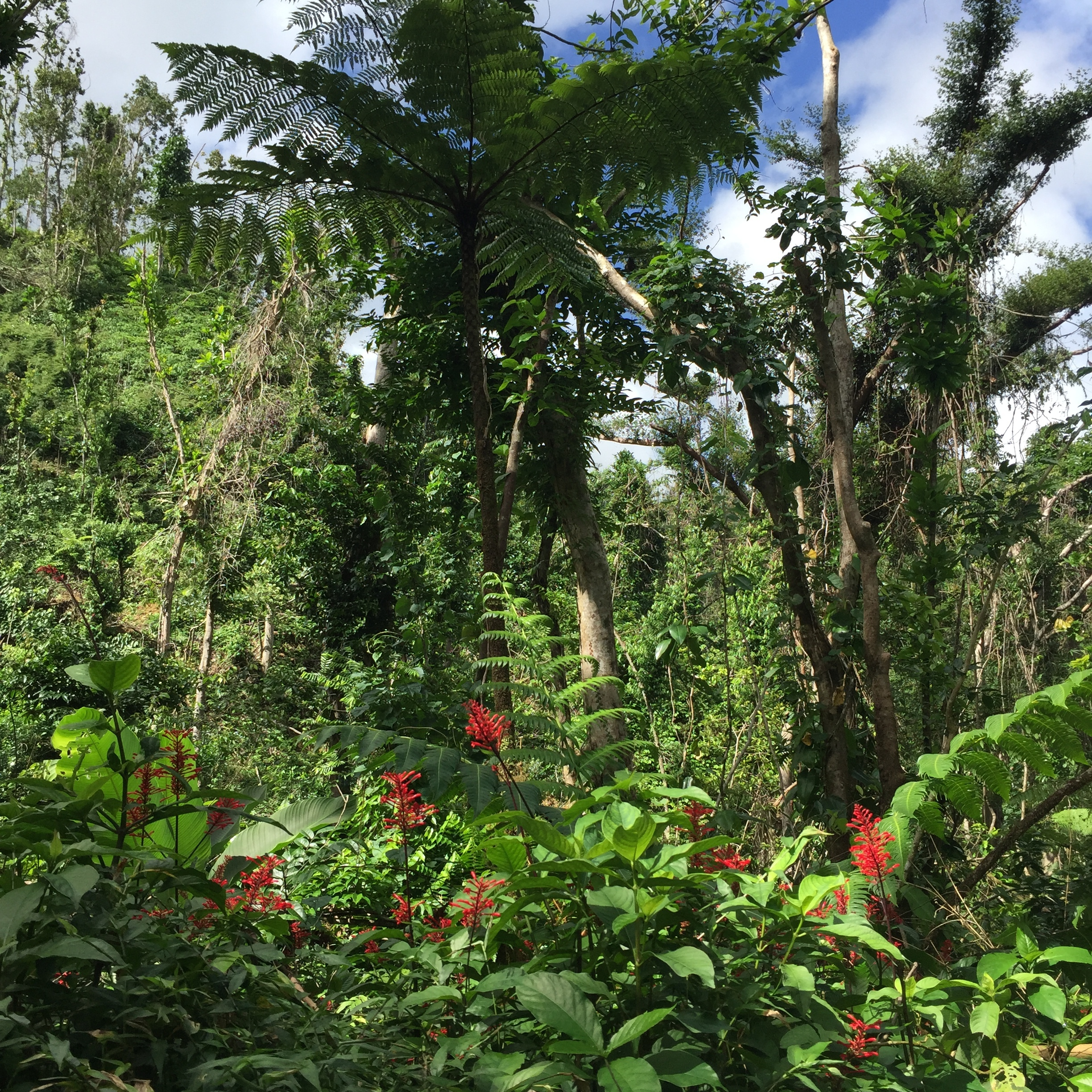 Parts of El Yunque is open! Are you ready to explore it!?