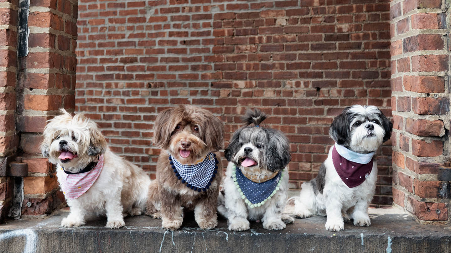 Latte Maddie Chewie Honey Oh Honey Bear 2017 dog scarves Brooklyn