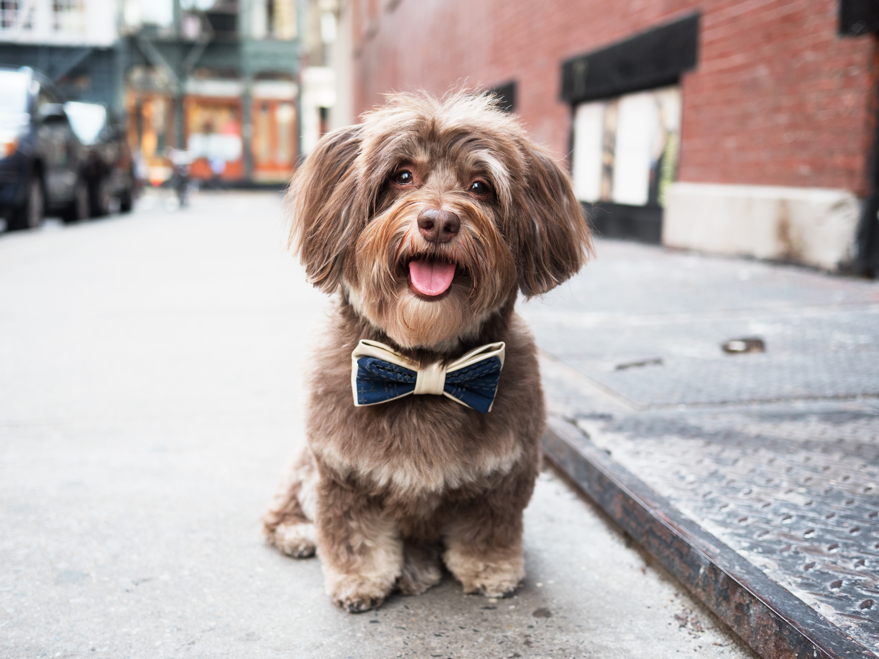 Chewie Wearing the Clyde Bow Tie from Oh Honey Bear