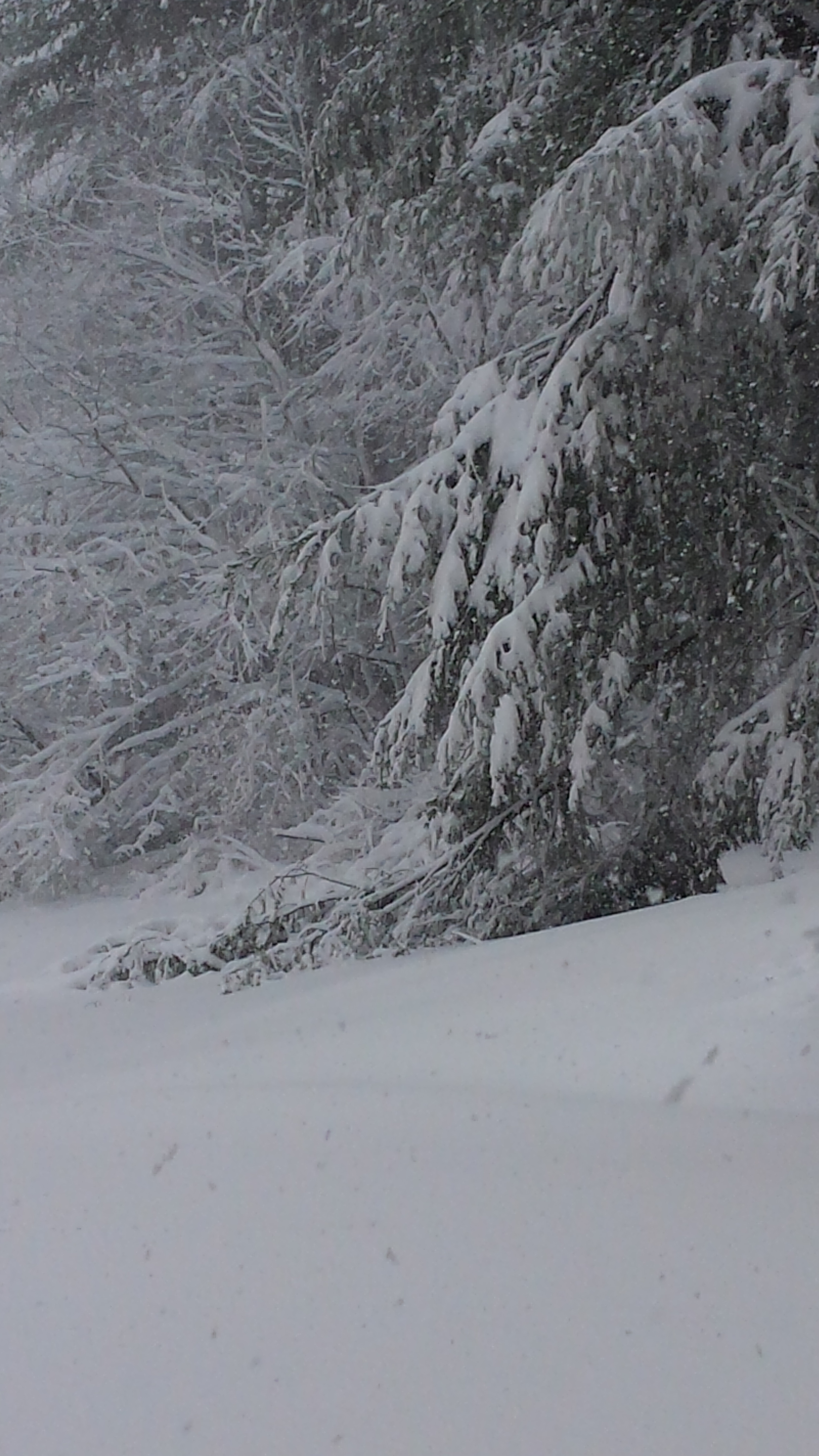 winter fun.jpg